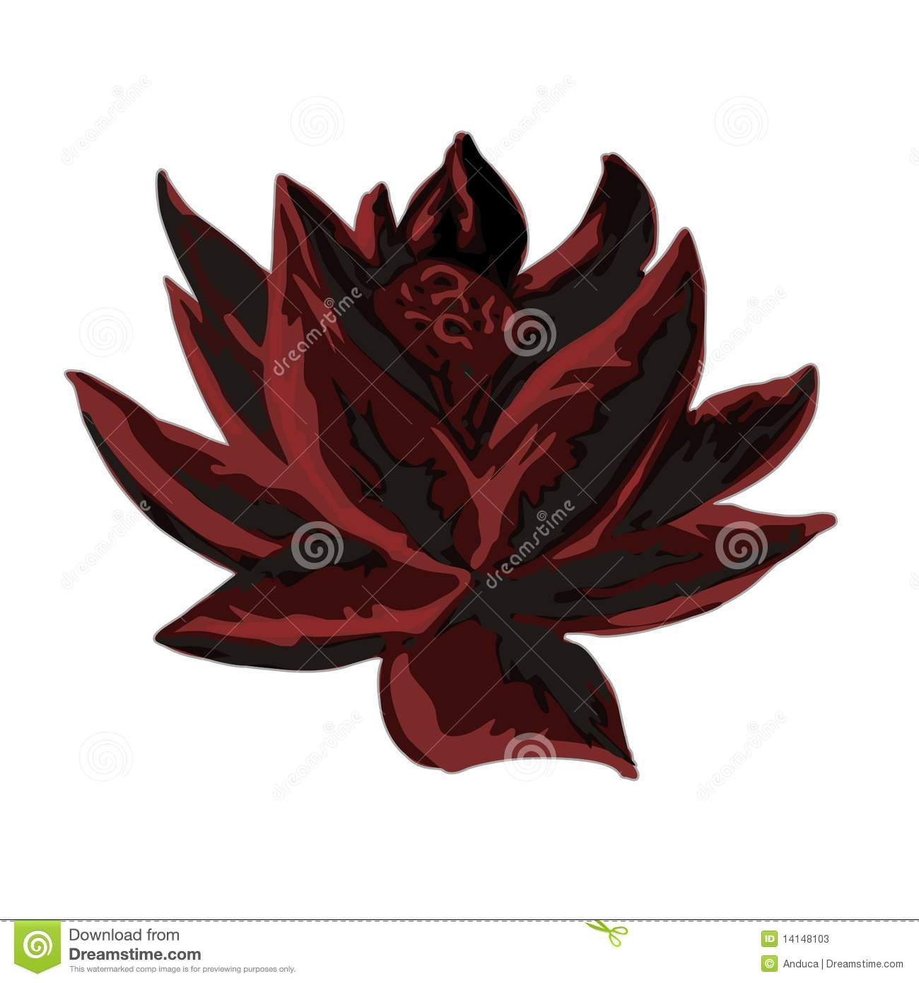 dark lotus stock photos  image, Beautiful flower
