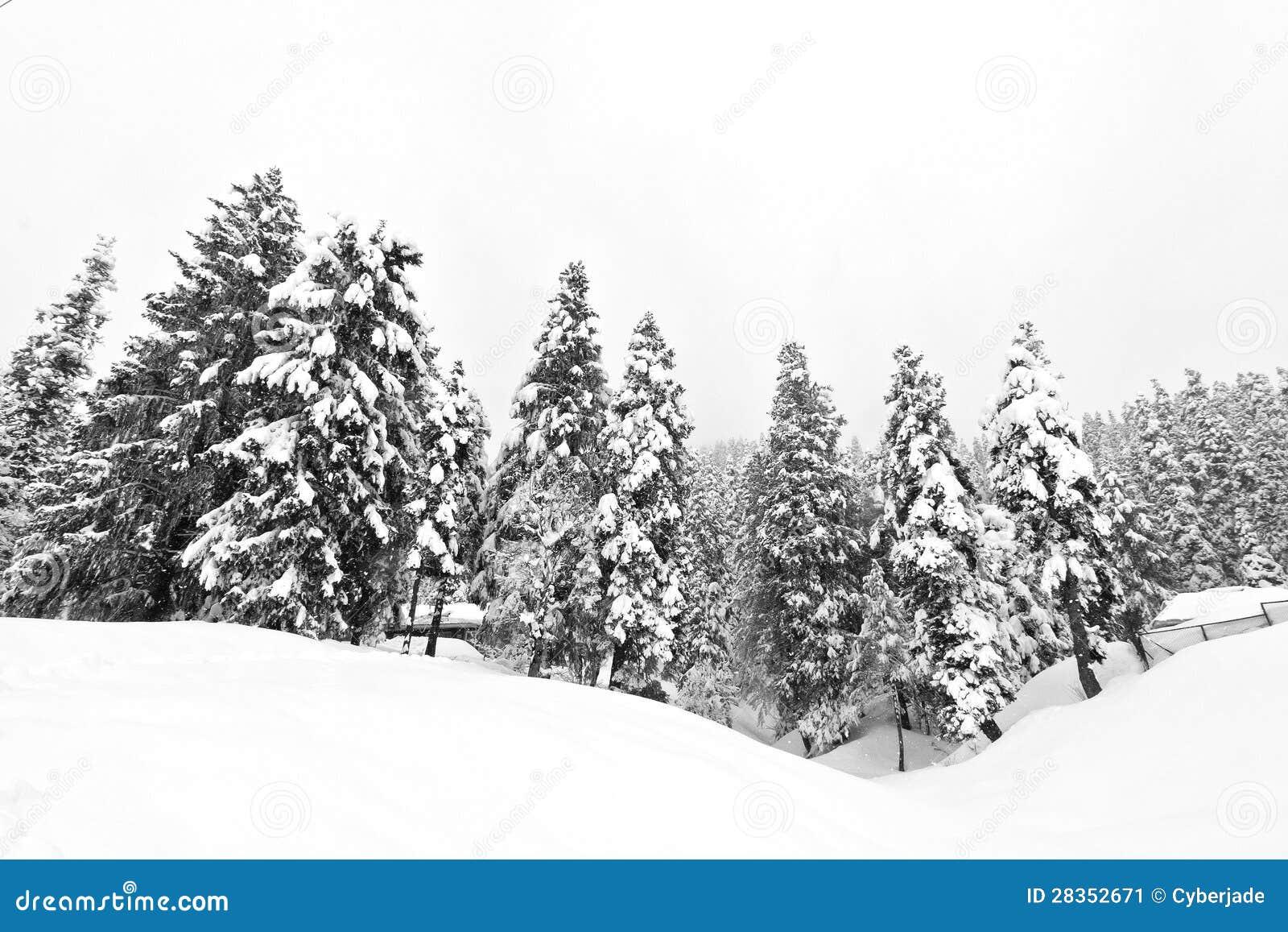 Black And White Misty : Dark forest in winter landscape black white stock