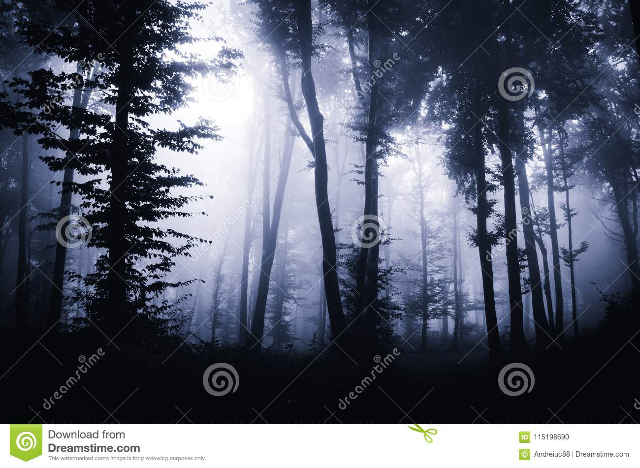 dark mysterious woods with fog haunted halloween forest with fog through trees mysterious forest at night haunted halloween forest