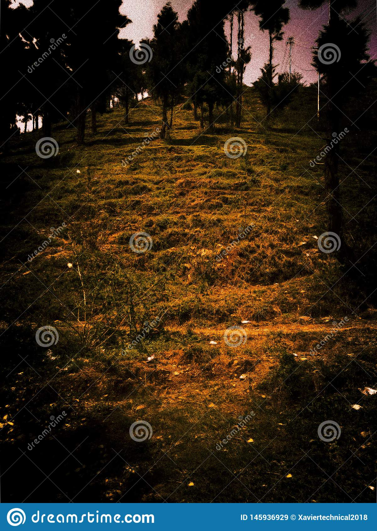 Dark night scene in a forest