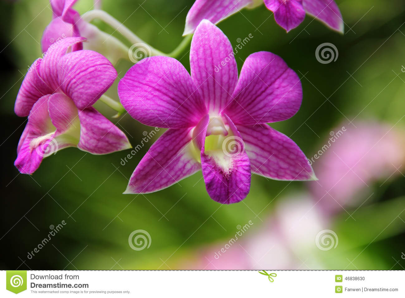 Picture On Left Taken By User Ninidazzle The Big Leaf Orchids Forum Source