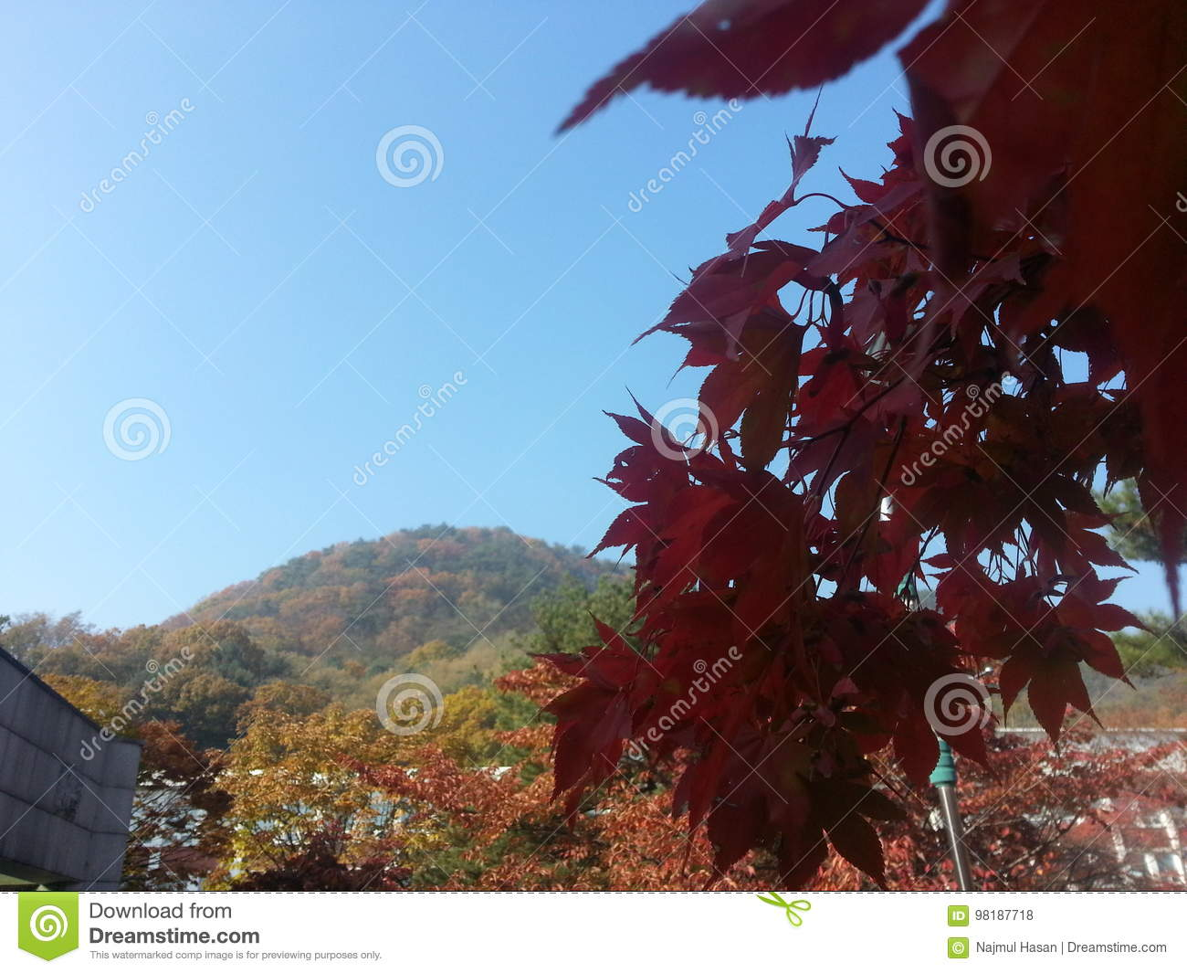 Dark Red Leaves On Trees Stock Photo Image Of Dark Colorful