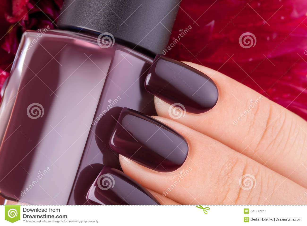 Dark red nail polish. stock image. Image of nails, cosmetics - 61008977