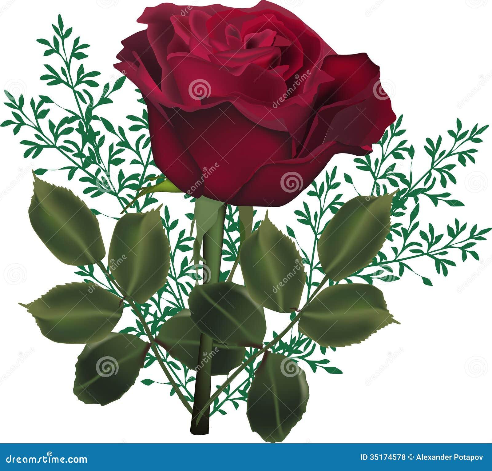 Dark Red Rose Flower In Green Plants Illustration 35174578 Megapixl