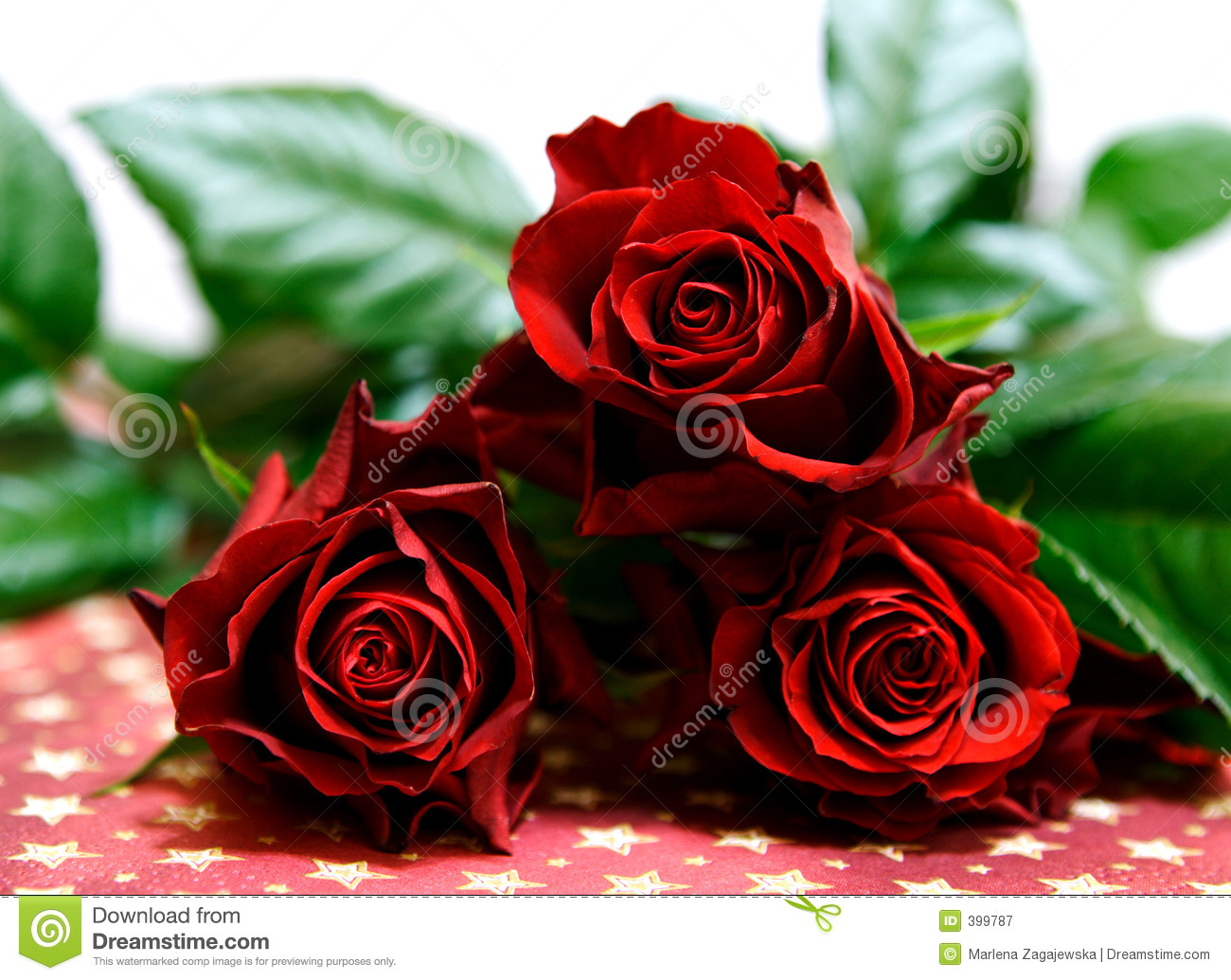 Dark Red Roses Stock Image Of Snifterb Romanse