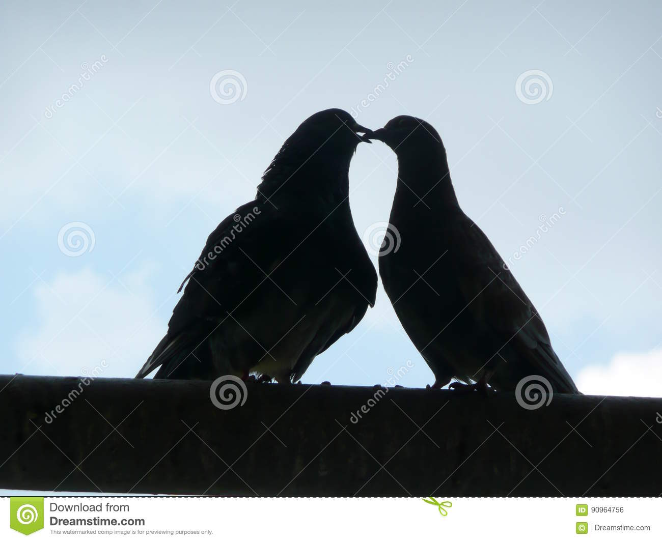 Dark silhouettes of two kissing pigeons