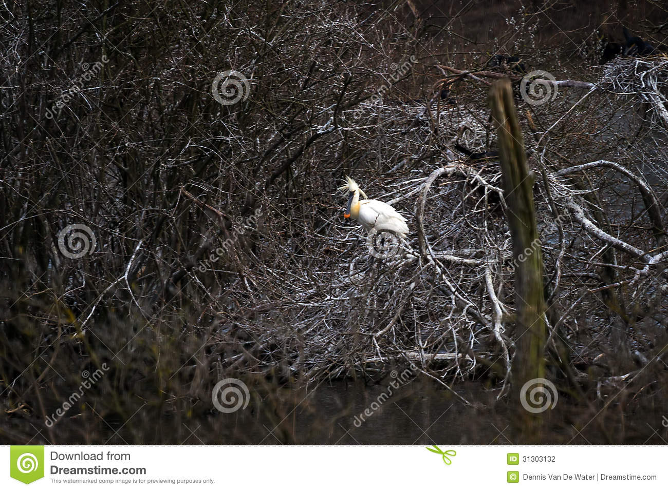 Dark spoonbill stock photography image 31303132 - Blauwe kamer ...