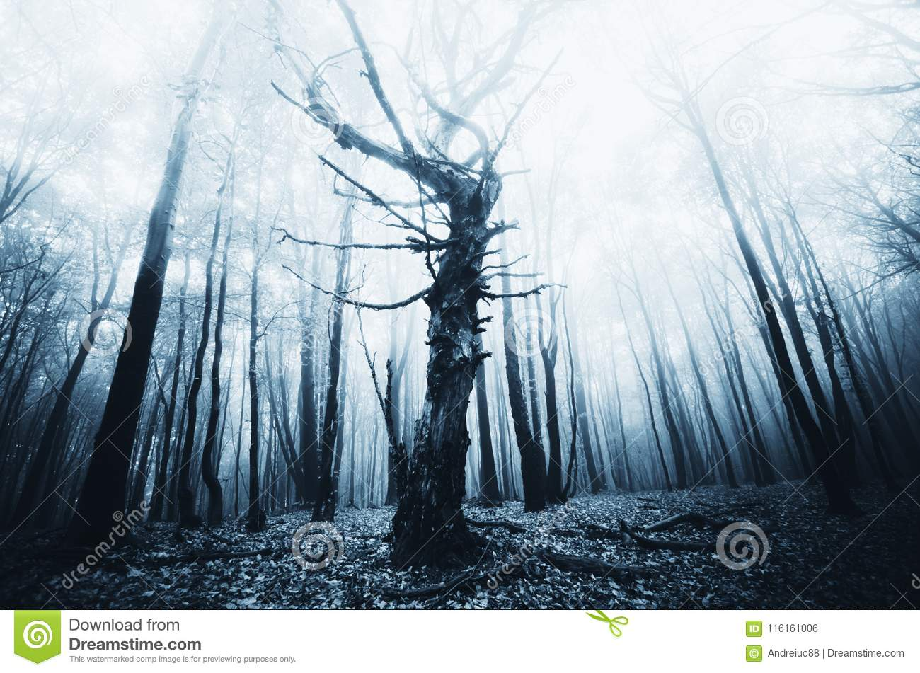 download dark twisted old tree in haunted forest stock photo image of eerie copyspace