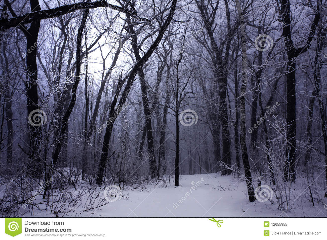 dark winter forest fog stock image image of path ethereal 12655955