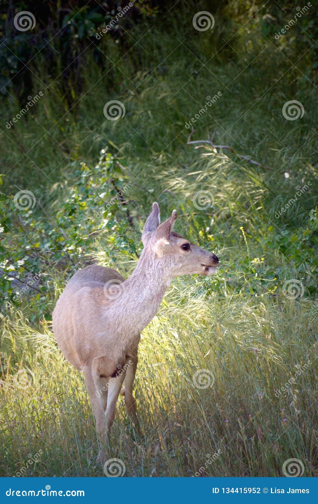 Darling Deer