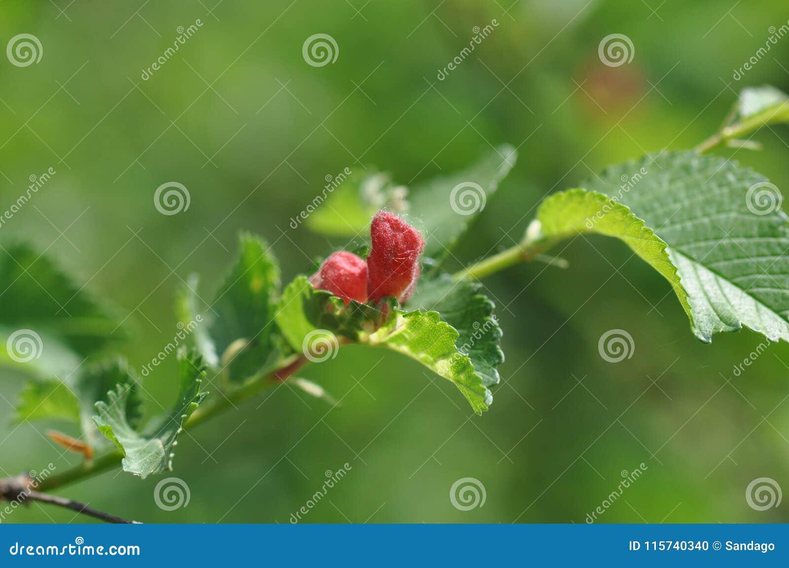 Darmozjad na liściach