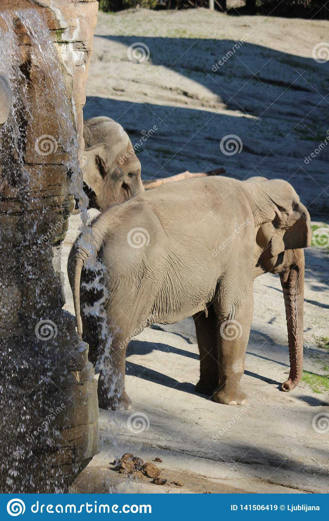 Das asiatischer Elefant Elephas maximus