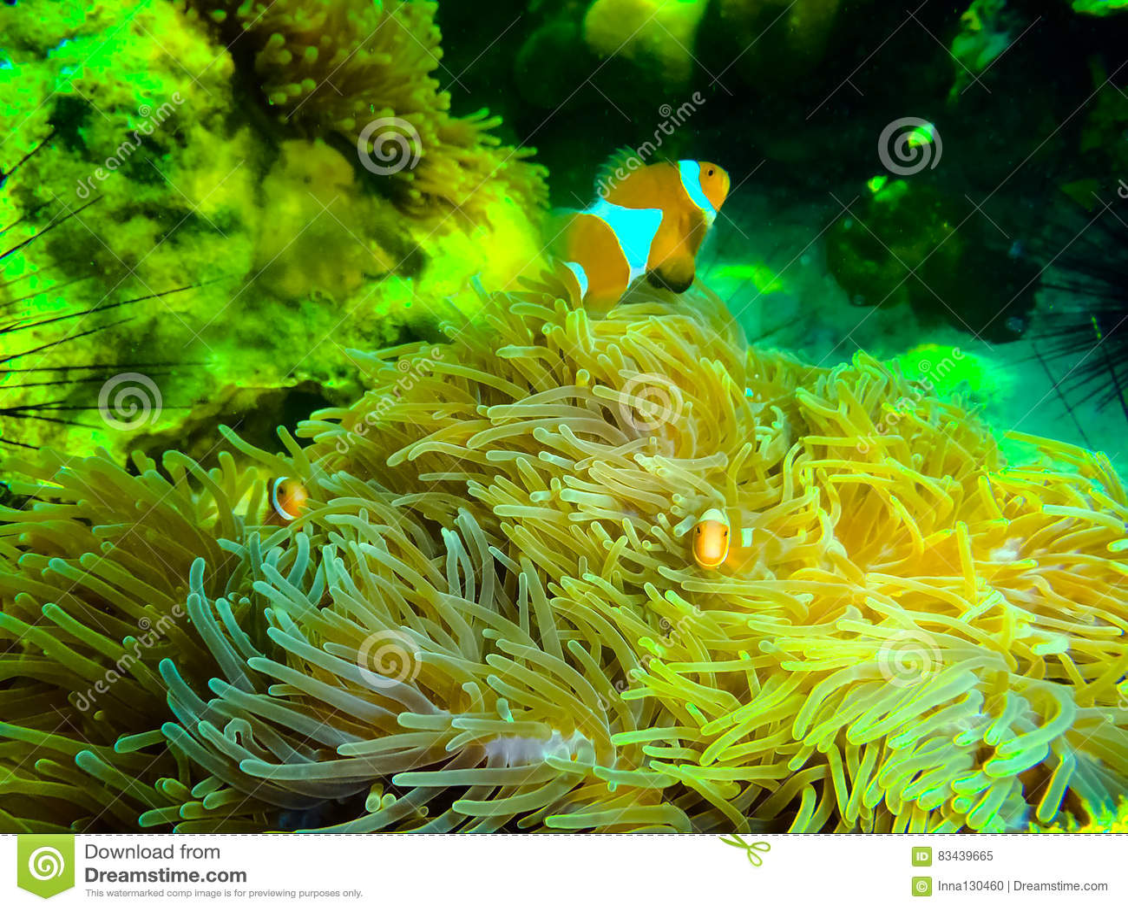 das bunte rote korallenriff mit meer in tropischem