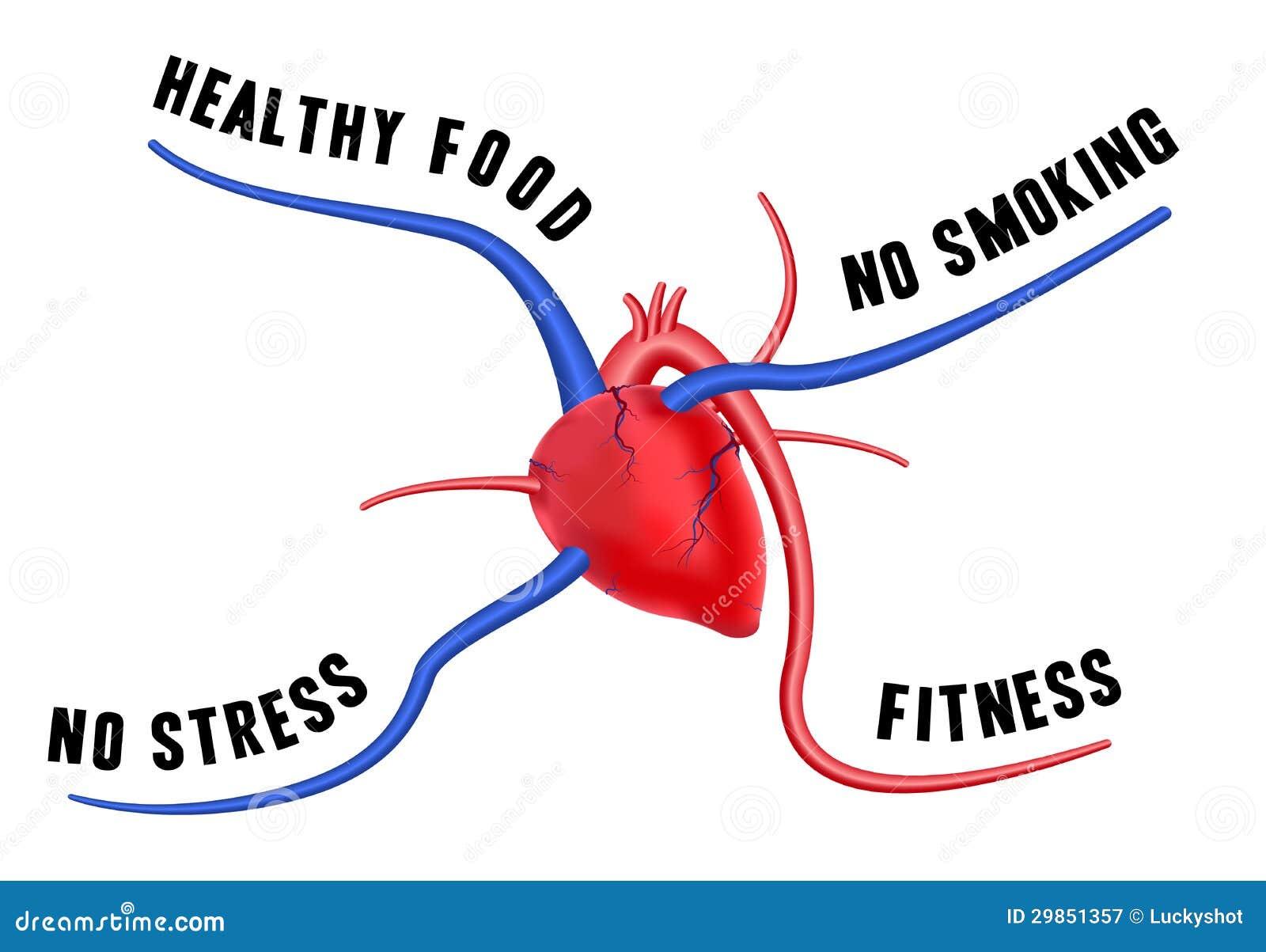 Ein gesundes Herz vektor abbildung. Illustration von diät - 29851357