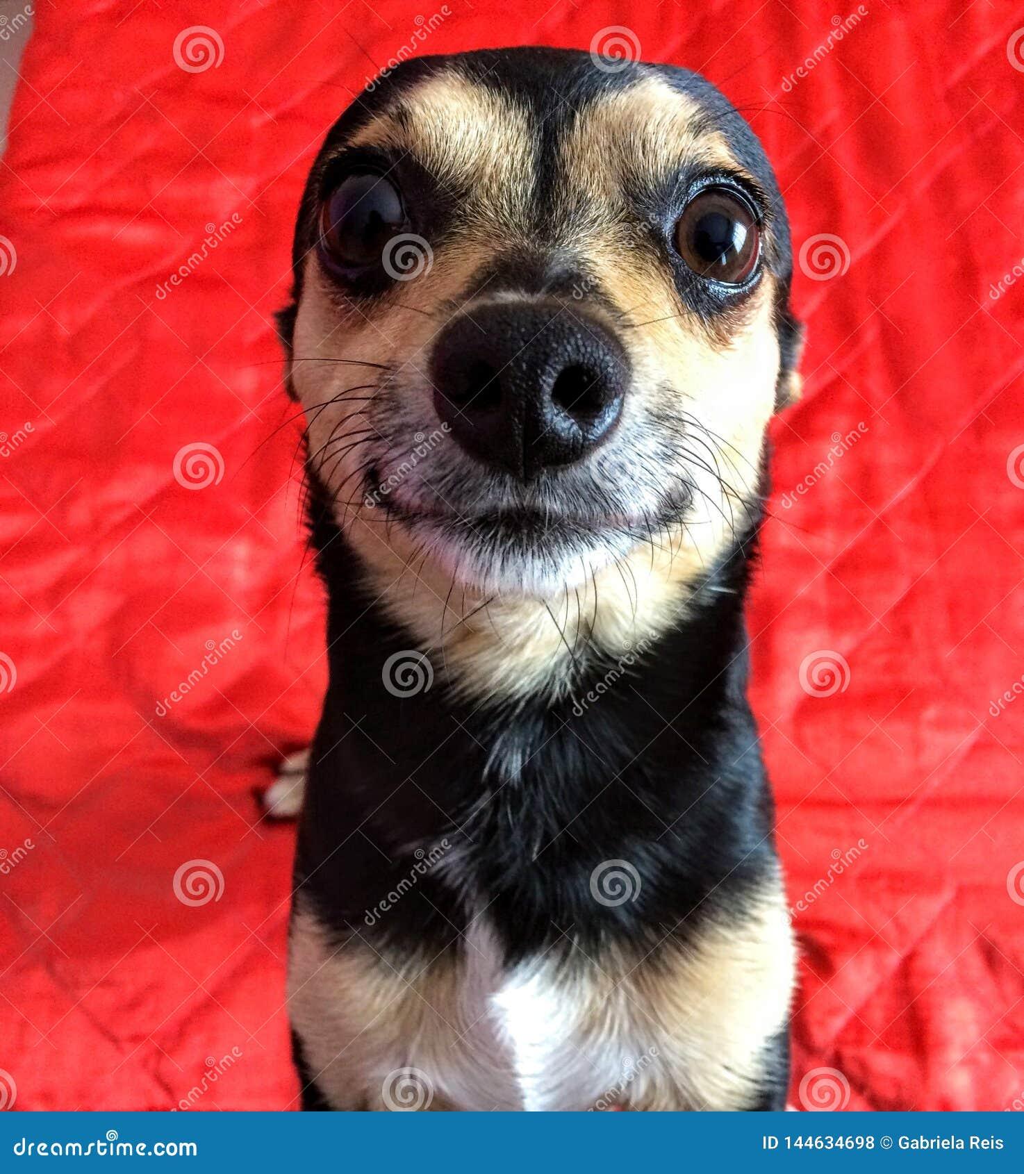 Das Gesicht des Hundes, das natürlich fungiert