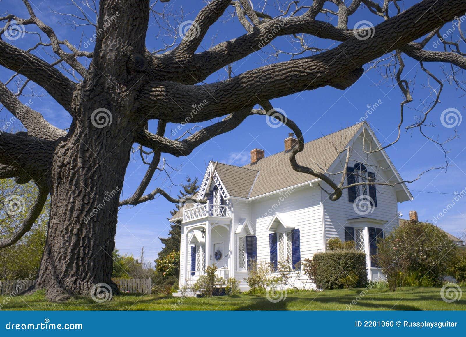 Das ikonenhafte Weiße Haus und Baum