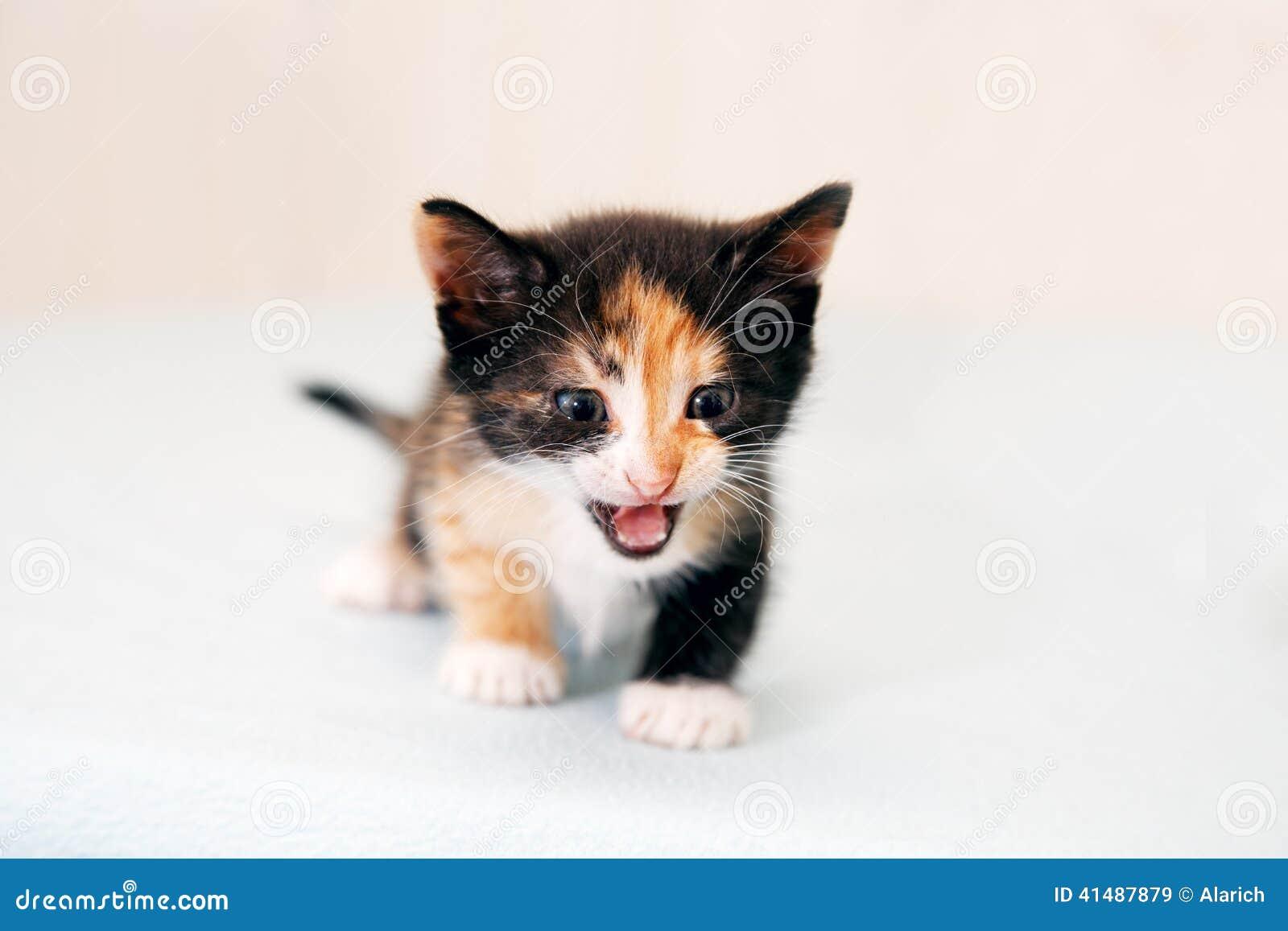 Das kleine des Kätzchens Knurren schrecklich