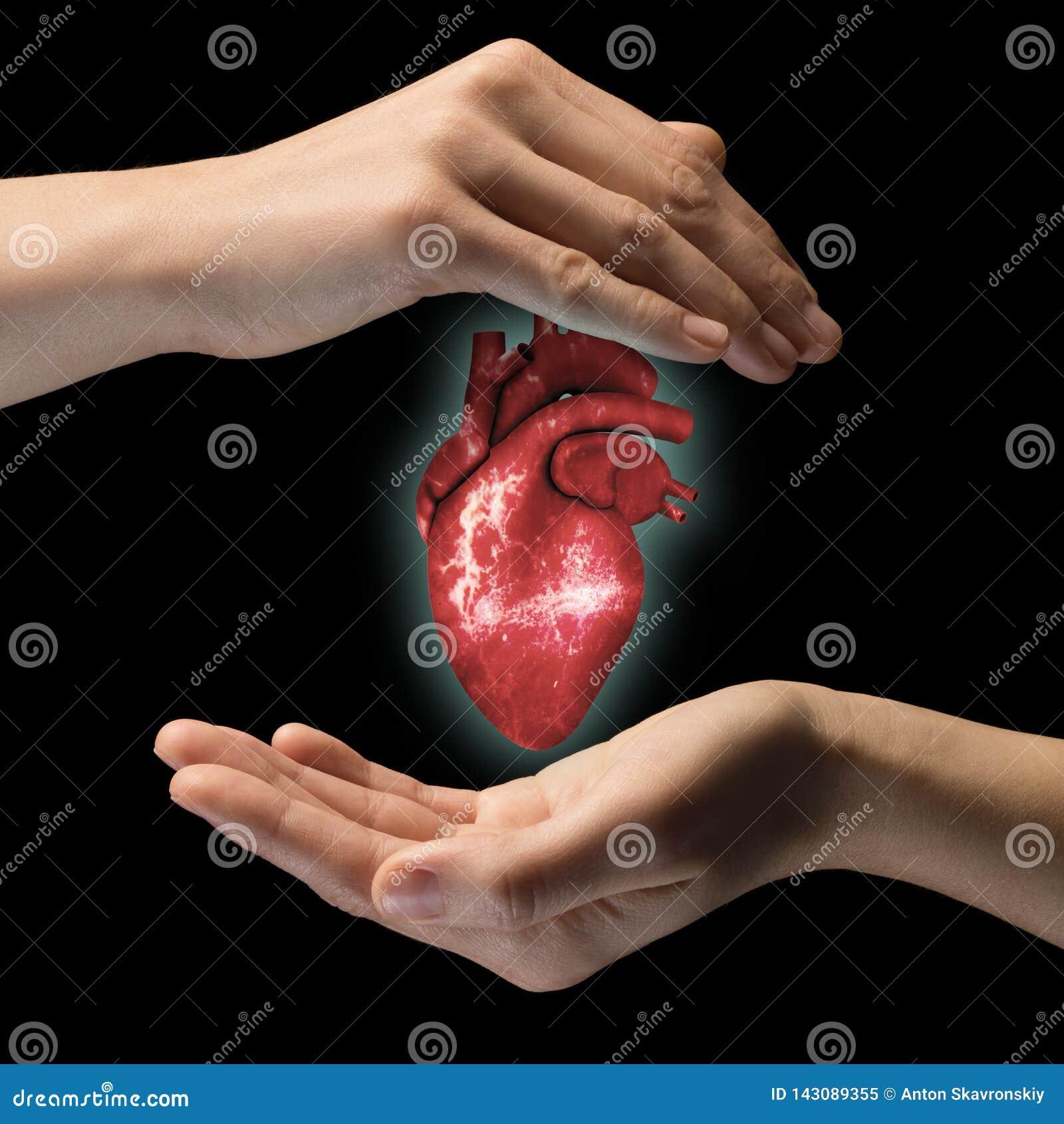 Das Konzept eines gesunden Herzens