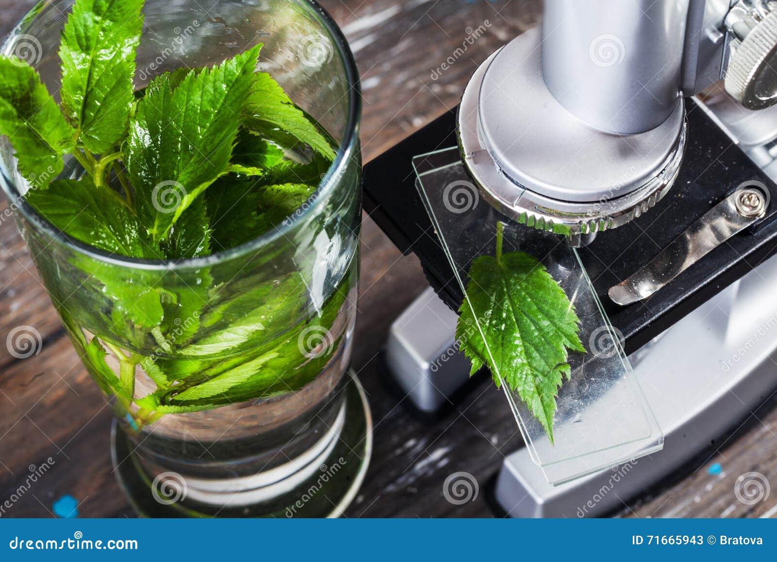 Das mikroskop der kinder in der stilllebentabelle verlässt
