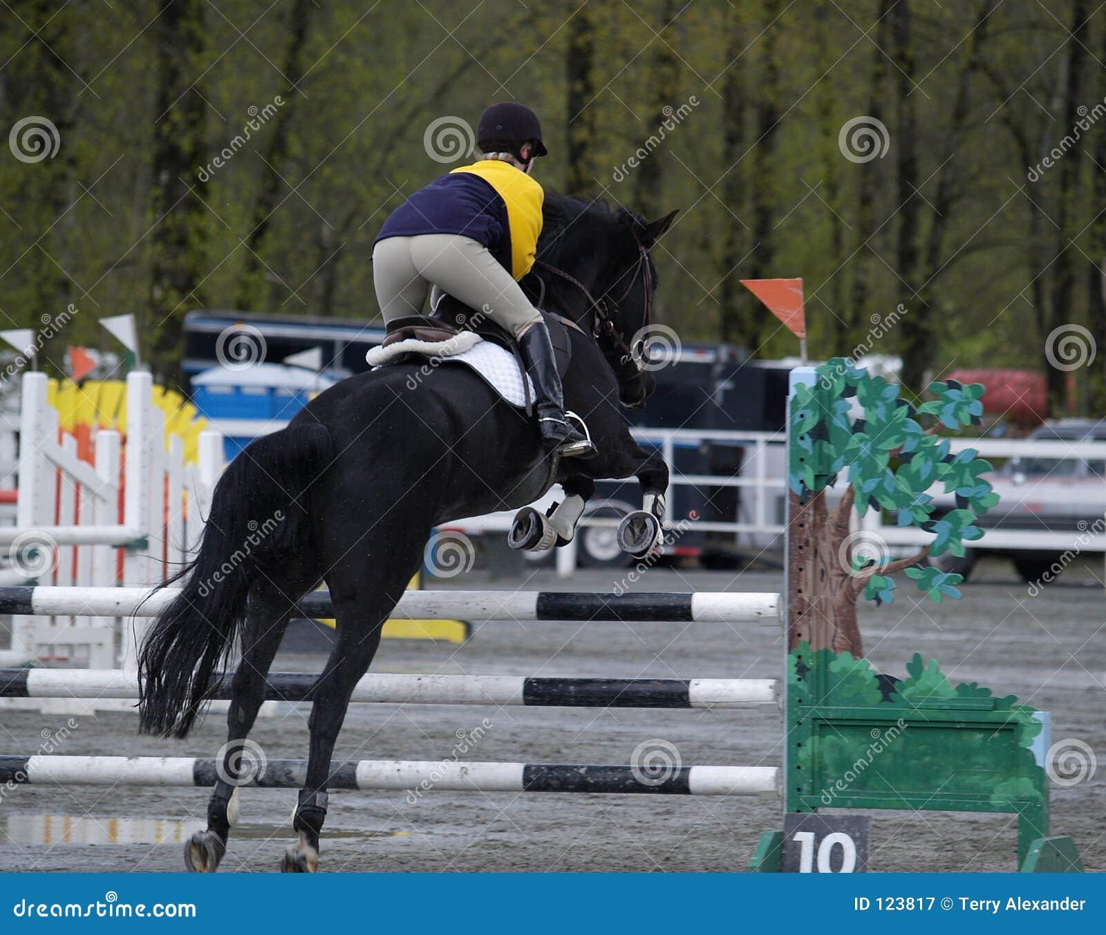 Das Pferden-Springen