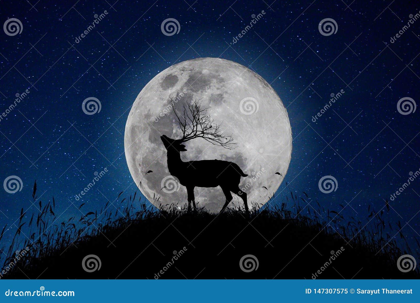 Das Rotwild steht auf dem Berg einen großen Mondhintergrund in der Nacht, dass die Sterne vom Himmel voll sind