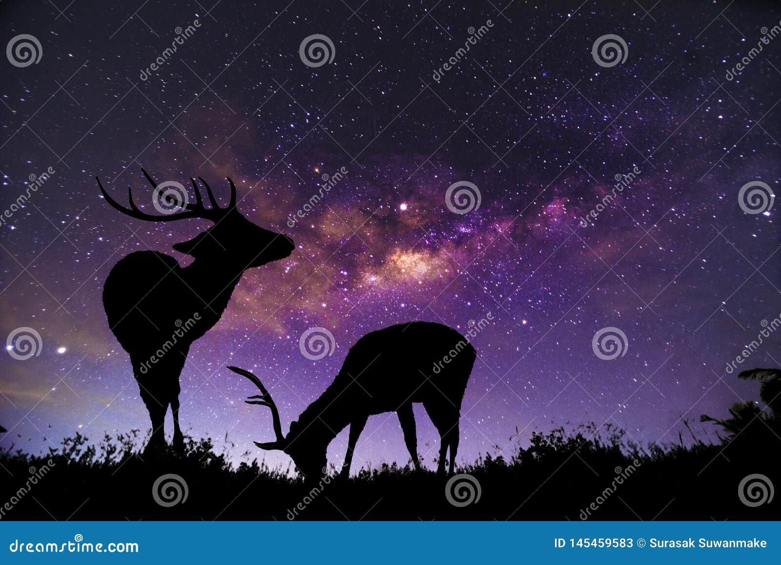 Das Rotwildbild steht in der Milchstraßekonstellation