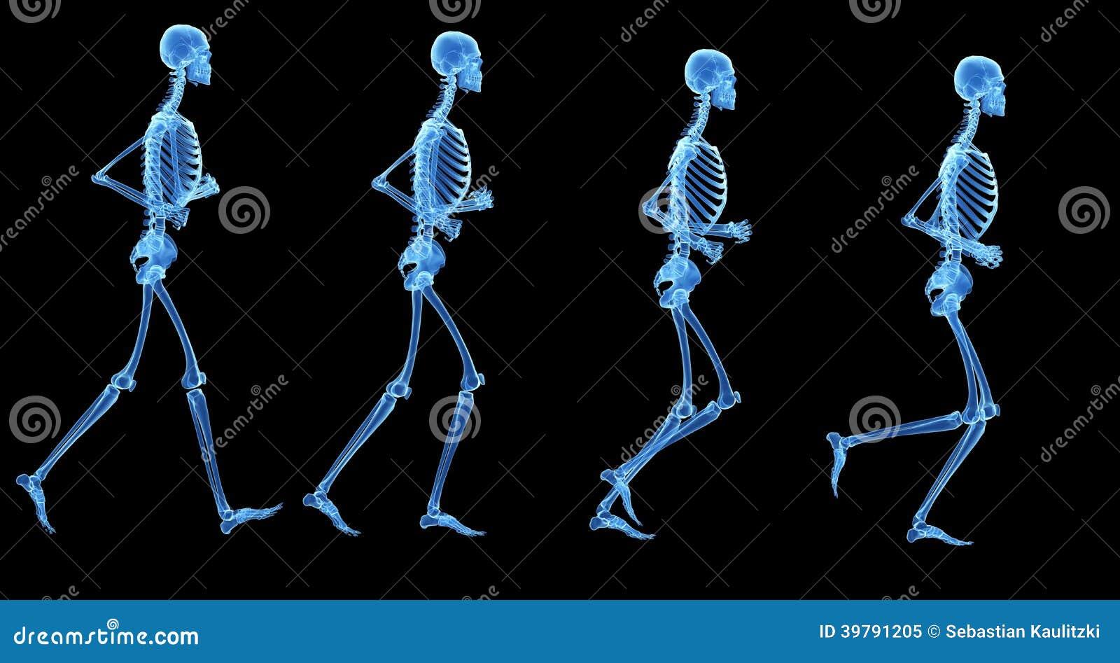 Das Skelett stock abbildung. Illustration von knochen - 39791205
