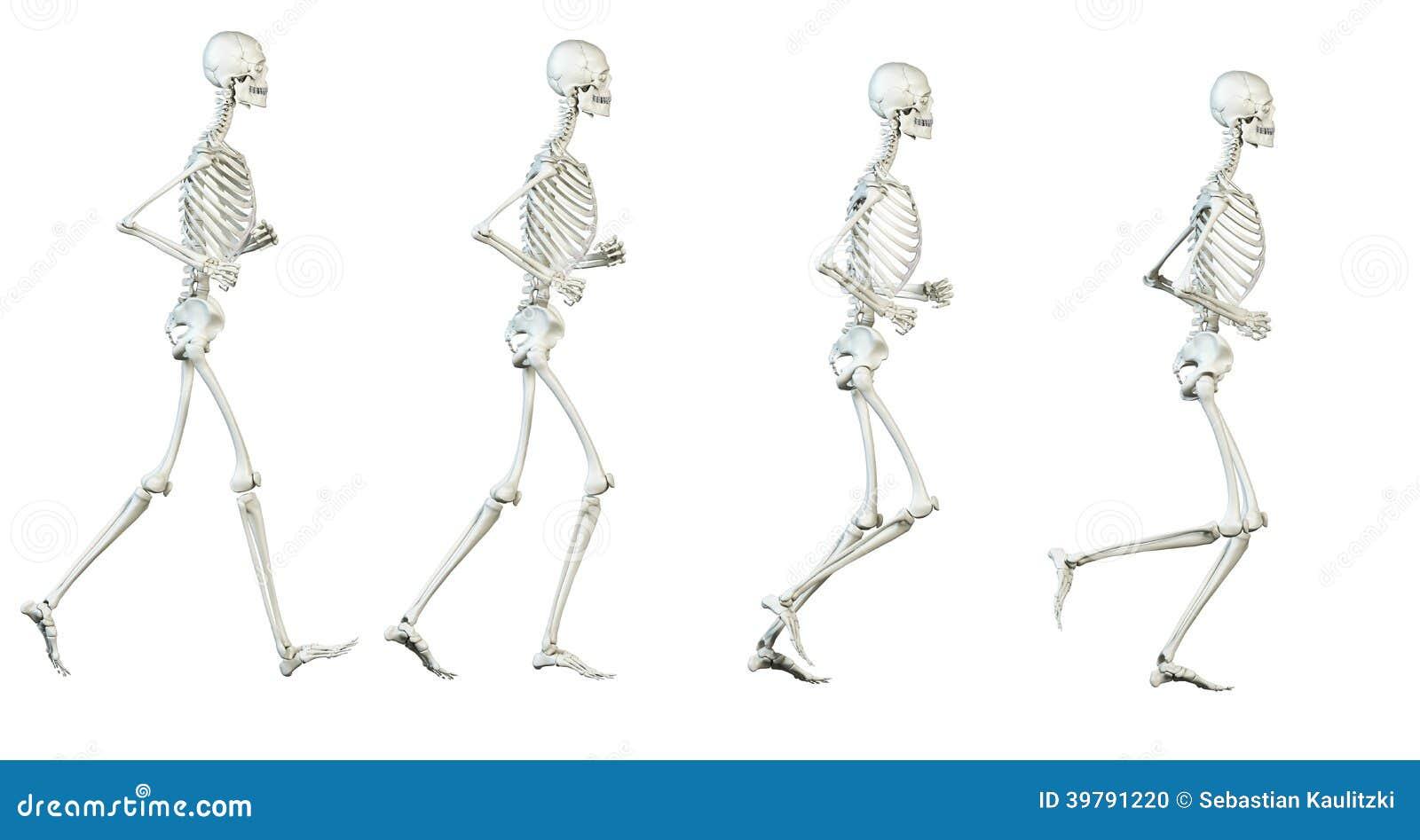 Das Skelett stock abbildung. Illustration von bewegung - 39791220