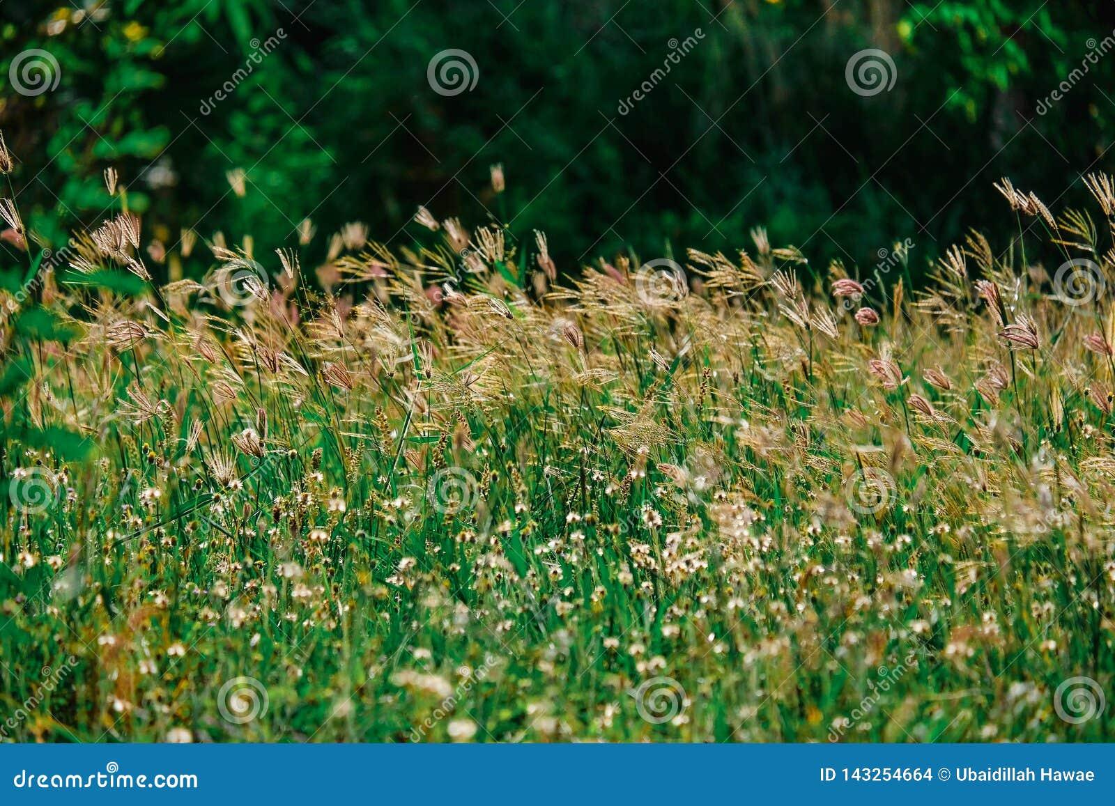 Das Sommergras verlässt die Blumen, um uns schön wirklich zu machen