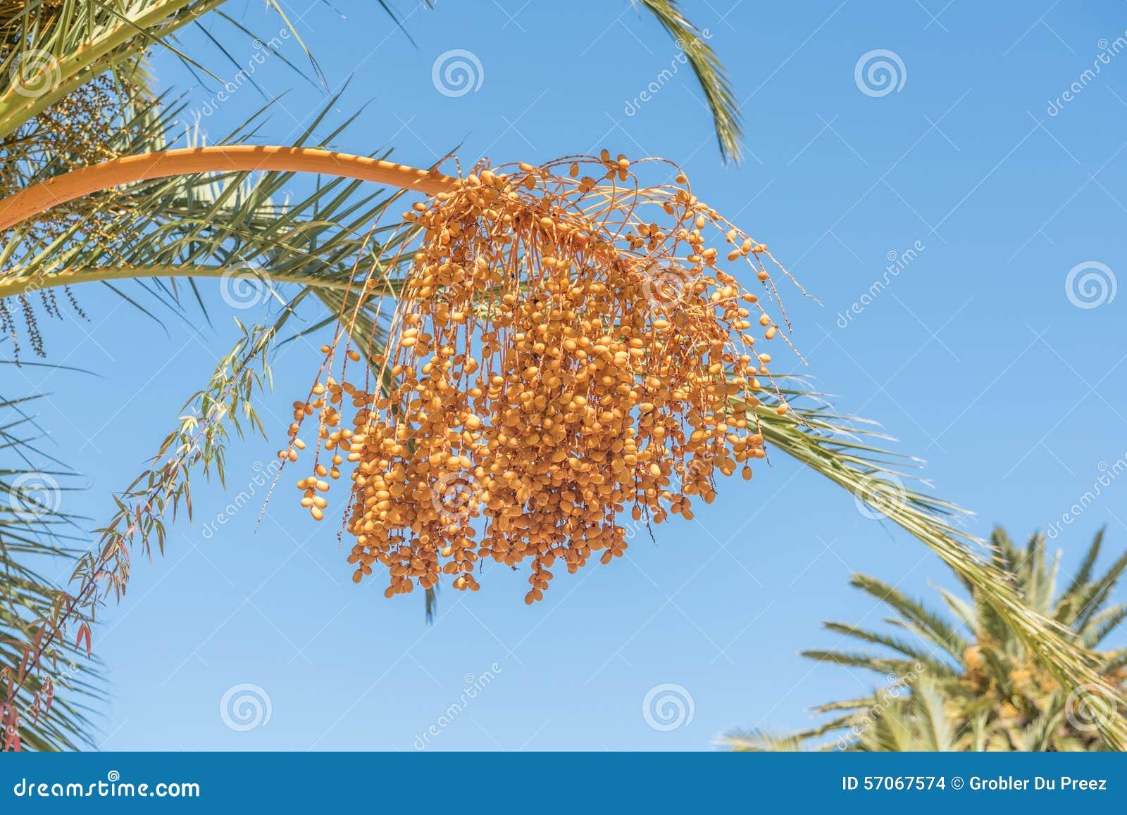 Data op een palm