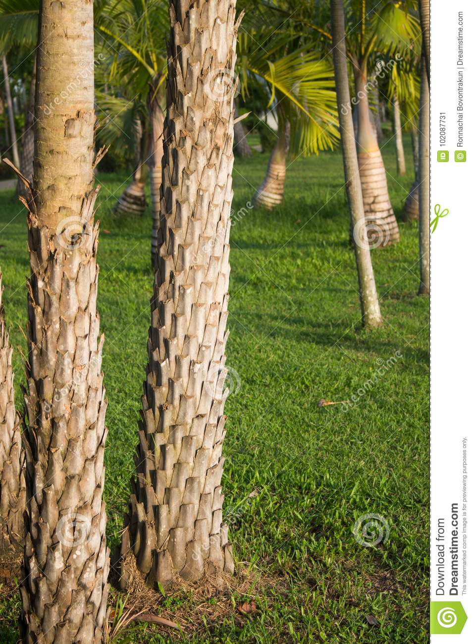 Date Palm Tree Trunk Stock Image  Image Of Plant  Pattern