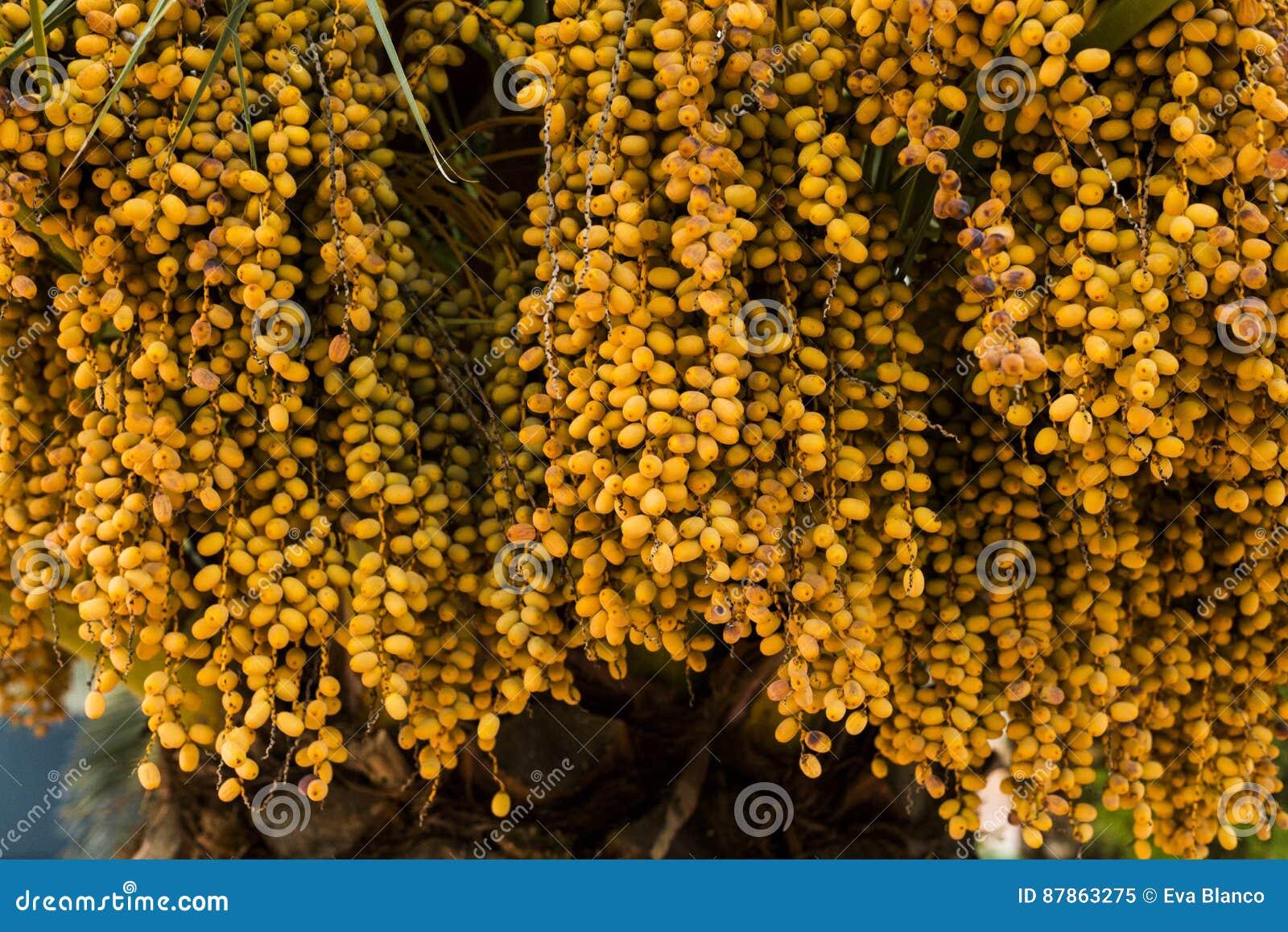 Dates de palmier de couleur ambre Fin vers le haut natu texturisé abstrait