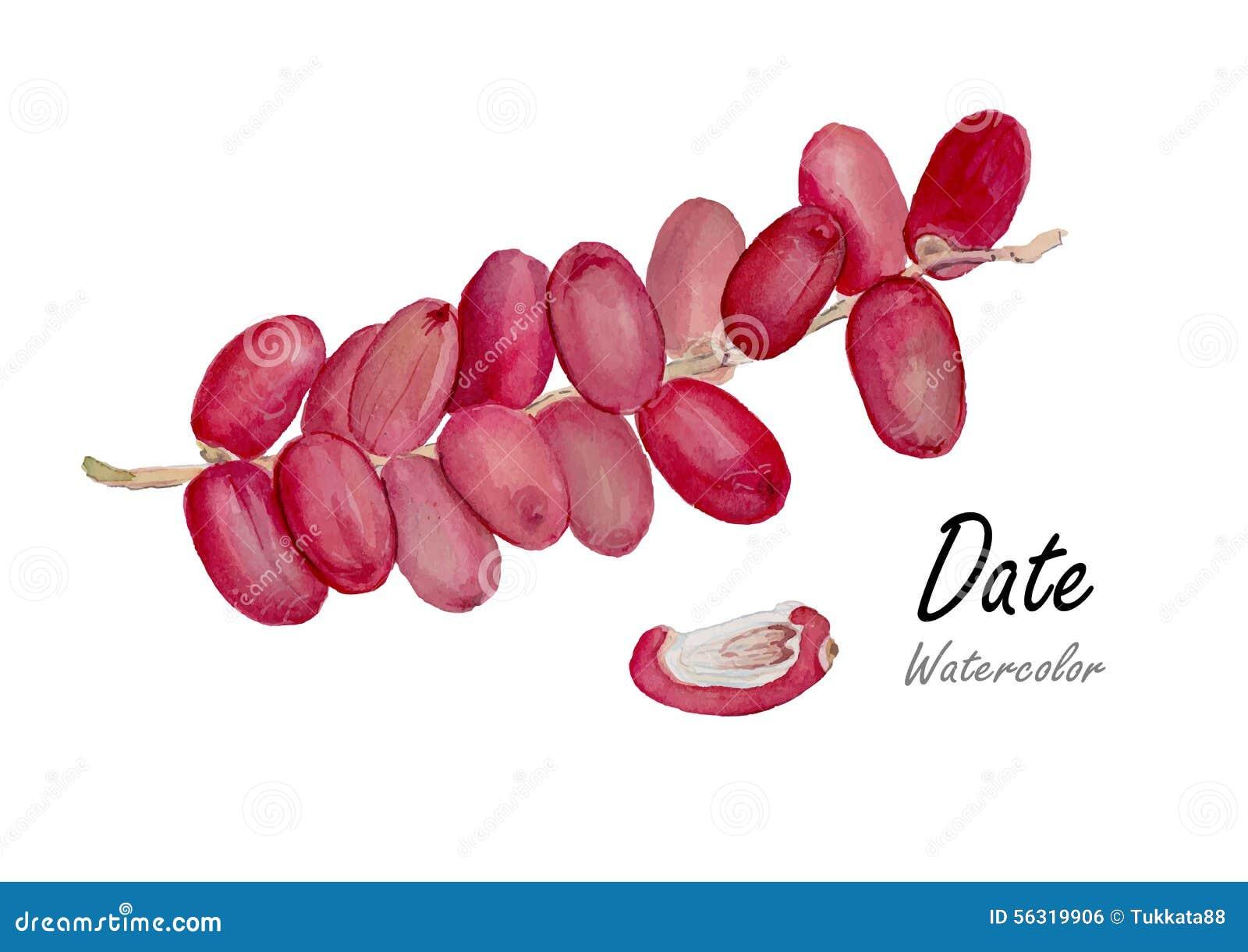 Datum nytt datum Hand dragen vattenfärgmålning på vit bakgrund också vektor för coreldrawillustration
