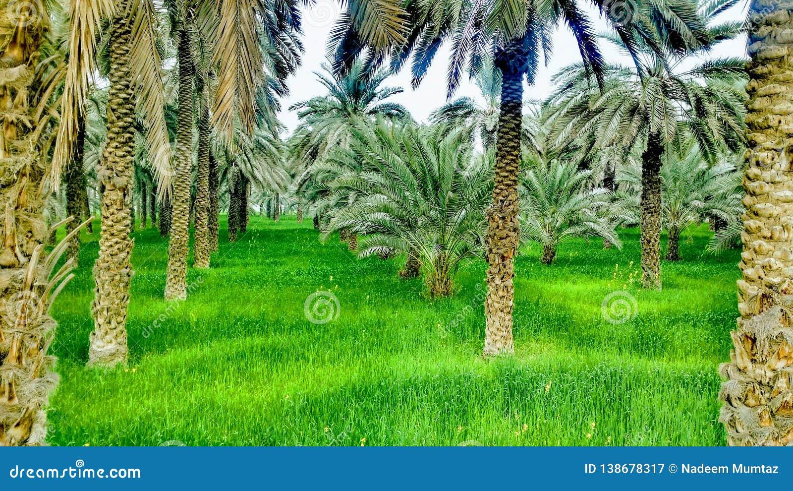 Daty palma z pięknem