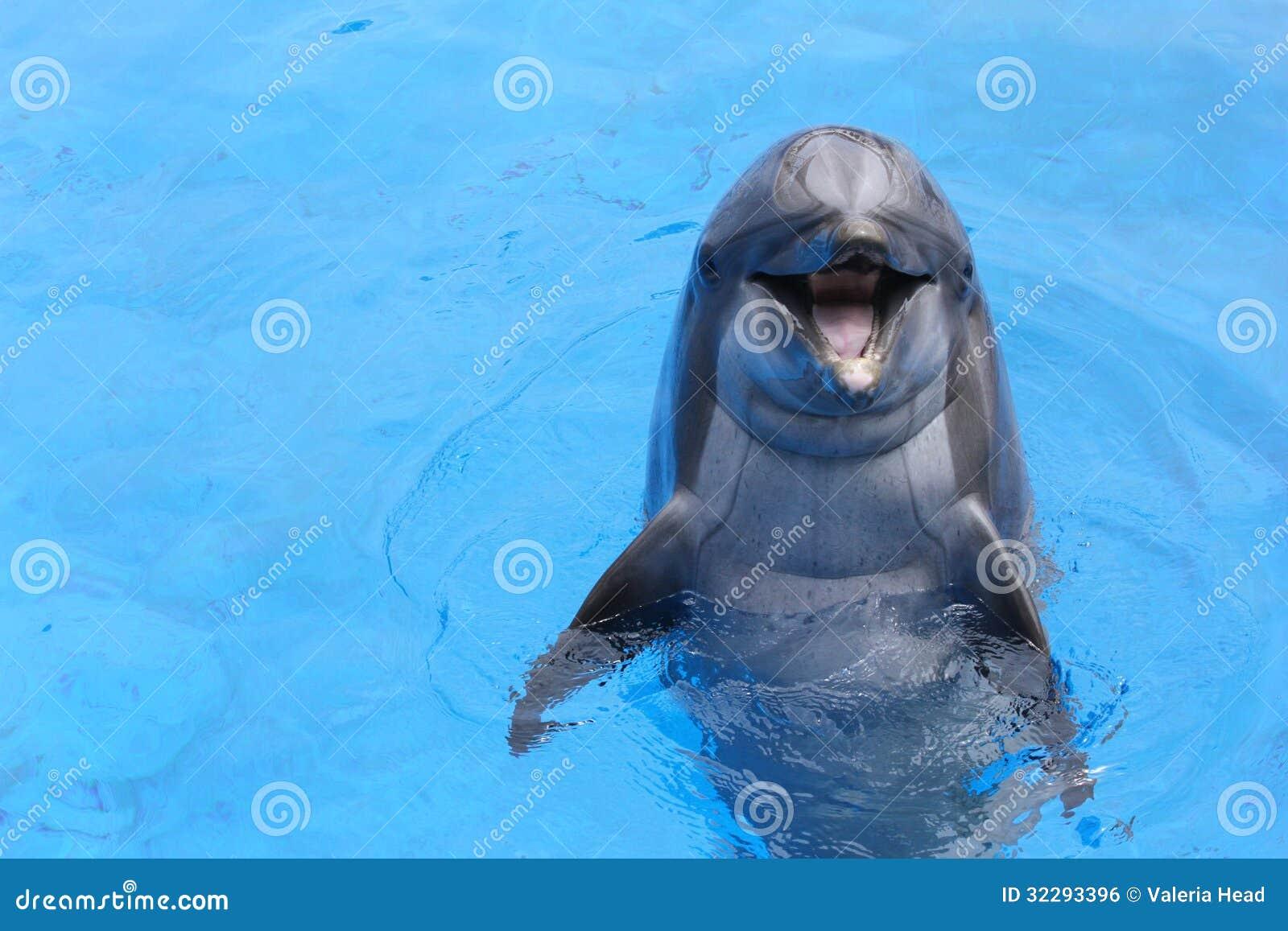 Dauphin de sourire