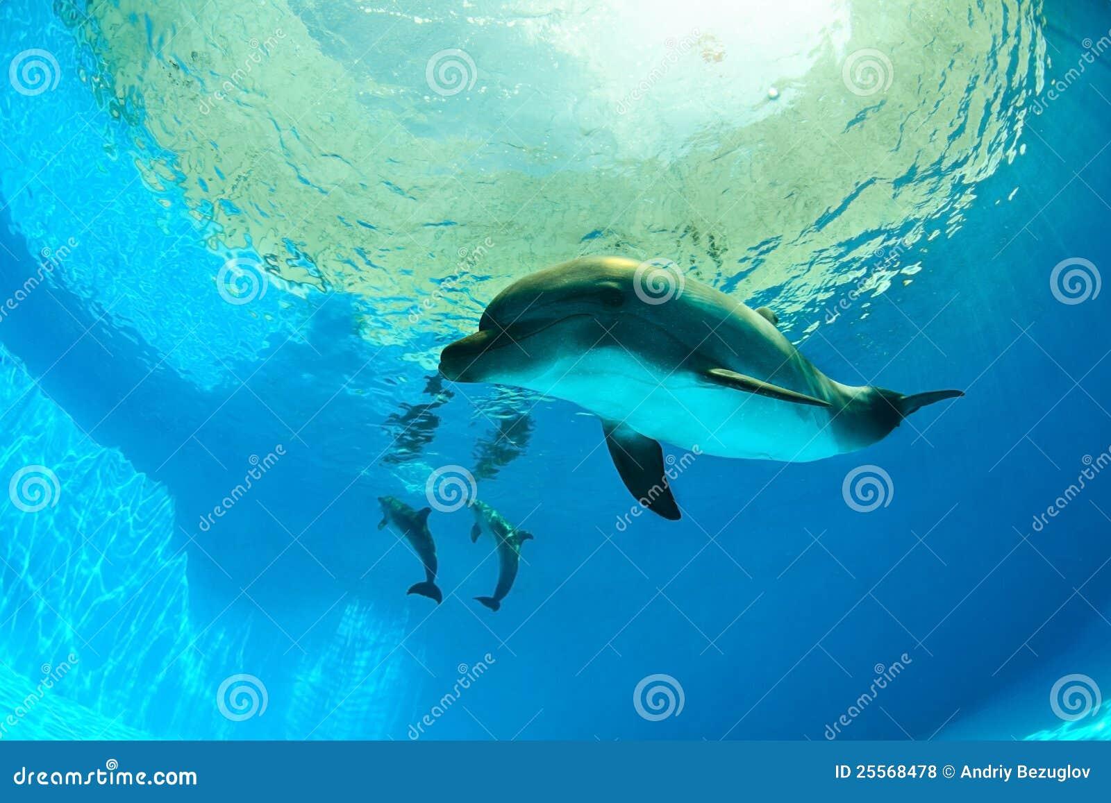dauphins sous l 39 eau photo stock image du course harmonie 25568478. Black Bedroom Furniture Sets. Home Design Ideas