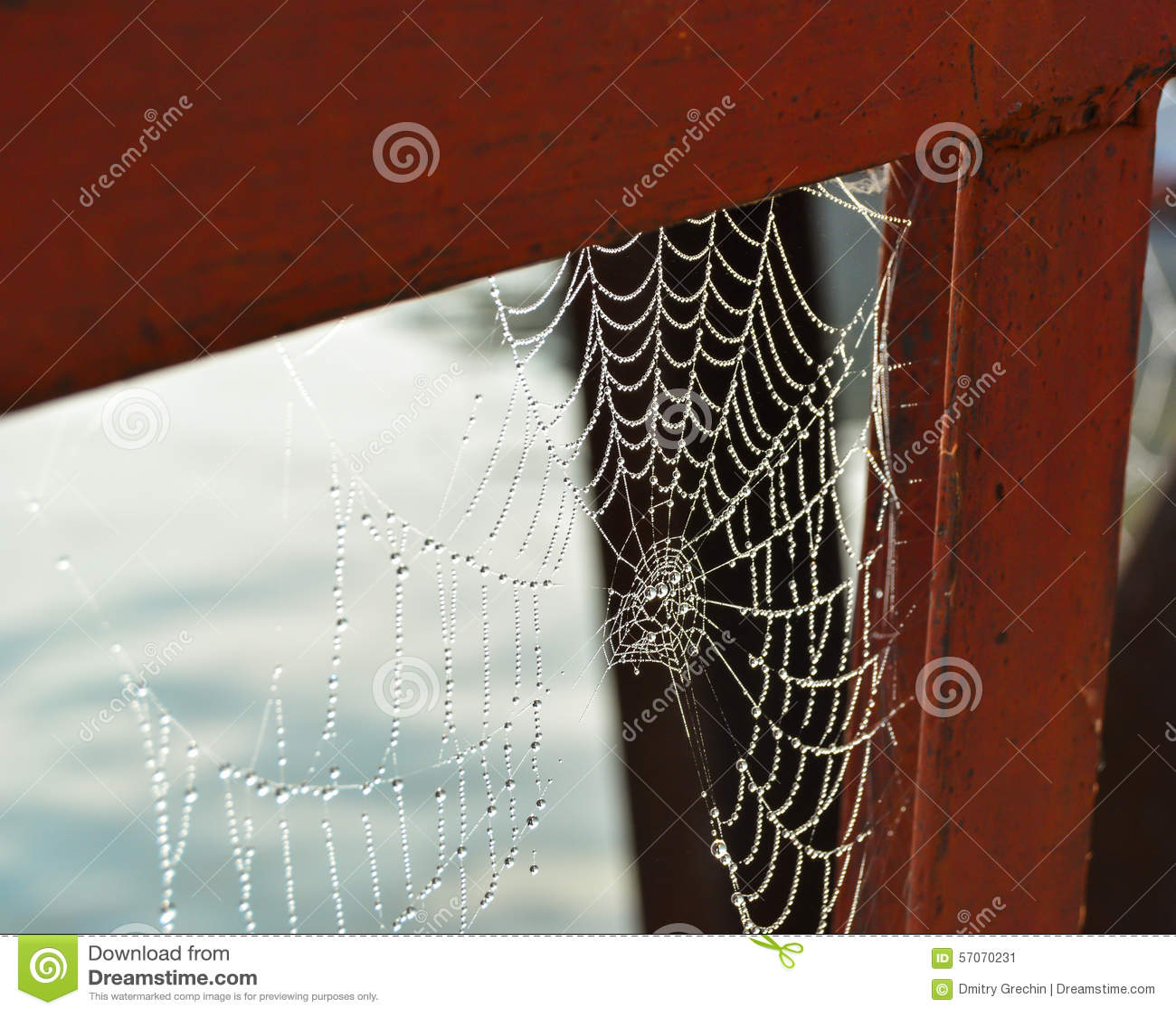 Dauw op het Web