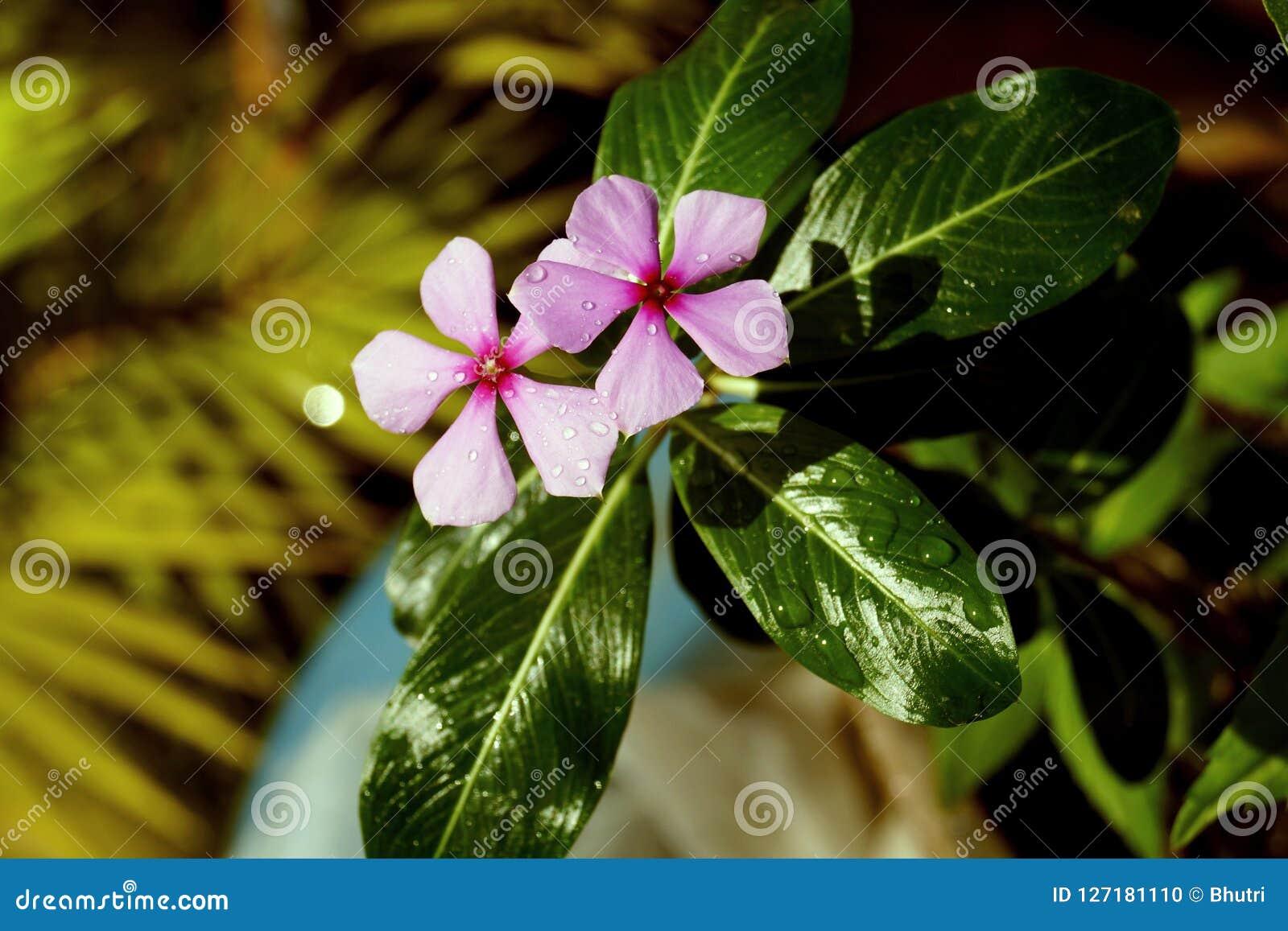 Dauwdalingen op bloem