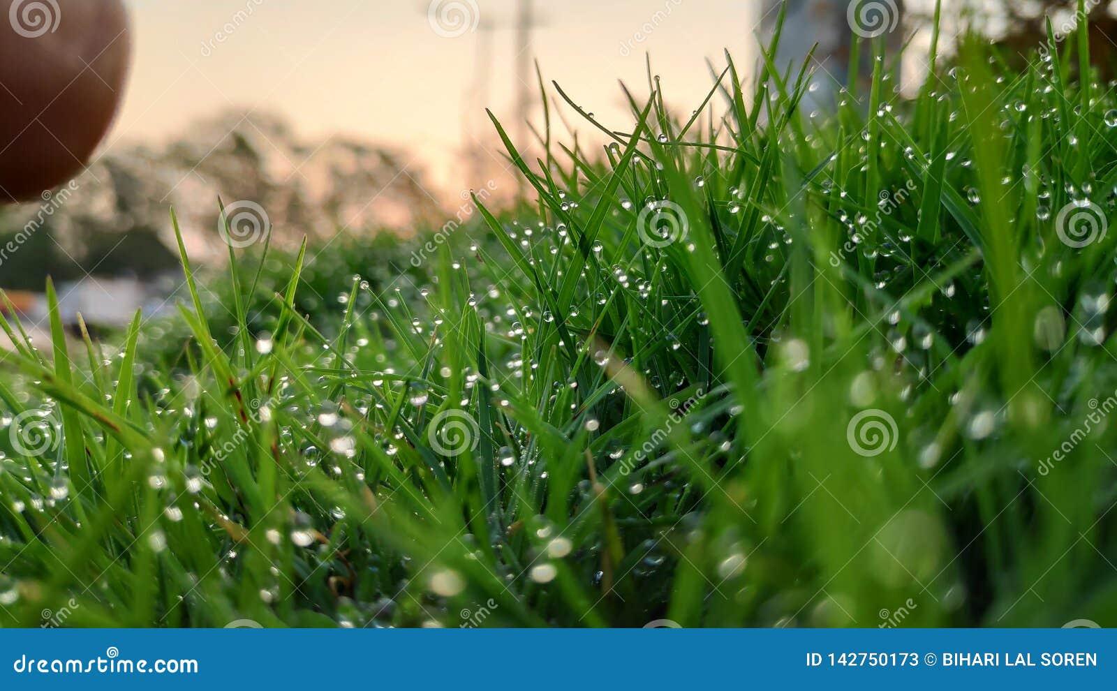 Dauwdalingen op het bladgrassprietje