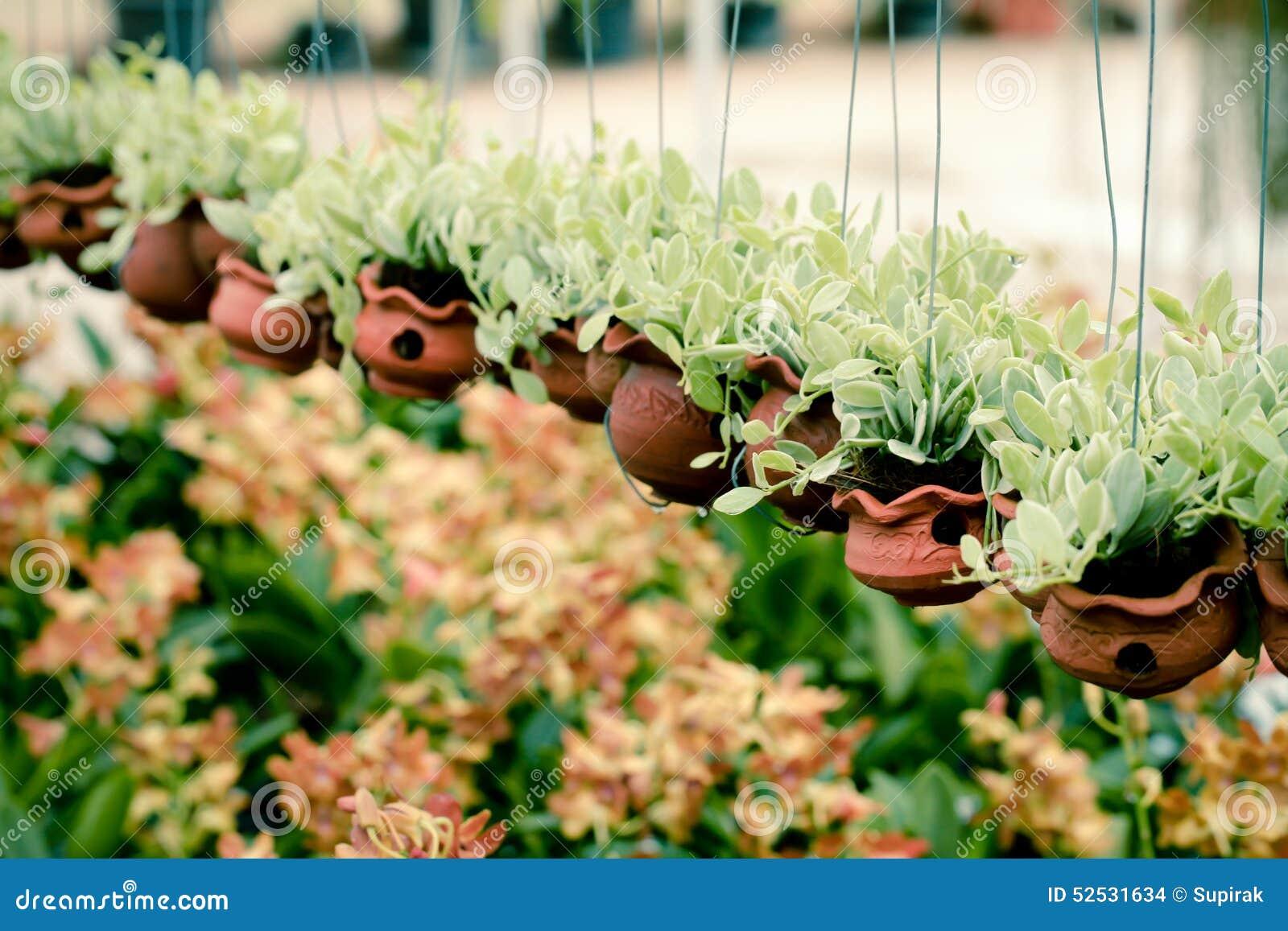 Planting Orchids Choosing Clay Vs Plastic Pots You