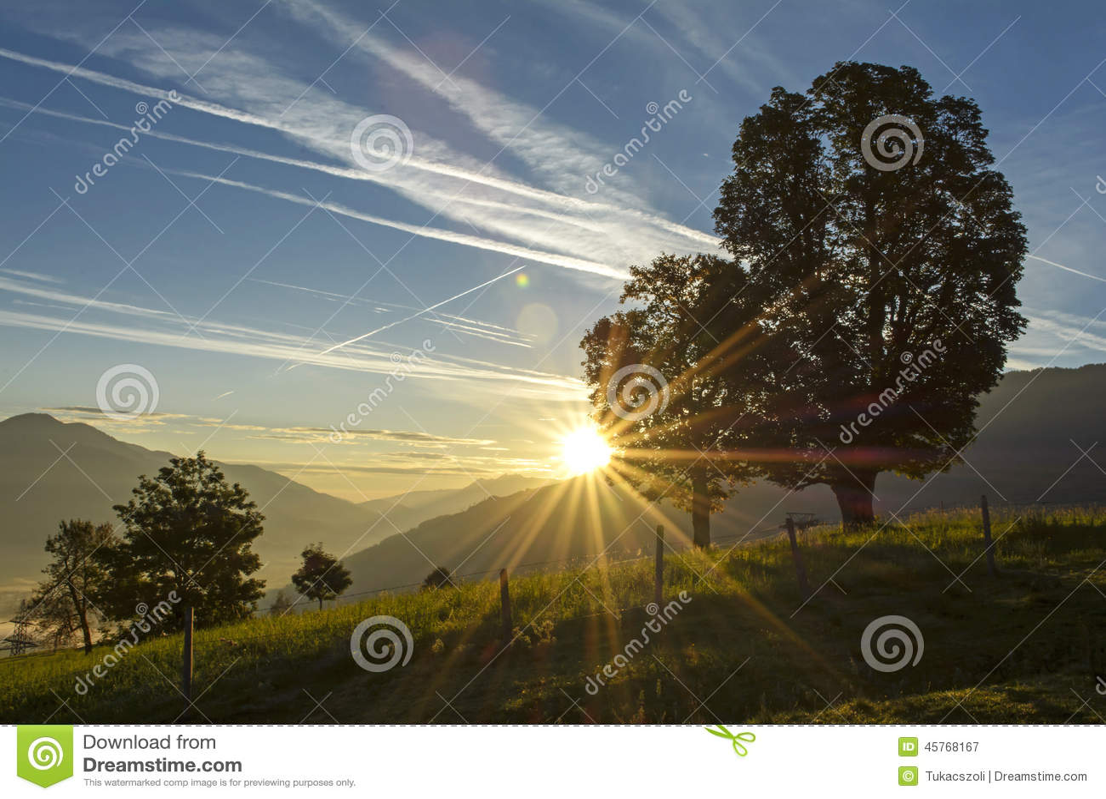 Dawn in het weiland