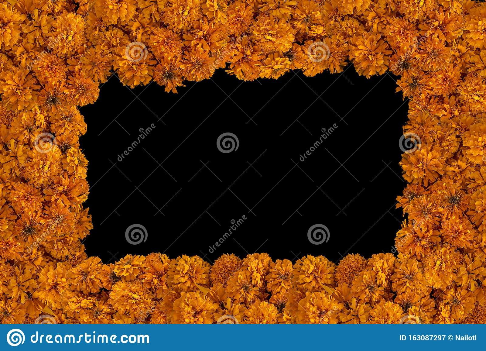 Day Of The Dead Copy Space Horizontal Field Of Flowers Of Dead Marigold Isolated Traditional Flowers To Celebrate The Day Stock Image Image Of Chil Gold 163087297 Hello mtgowikiprice user, we hope you like our pricing service! dreamstime com