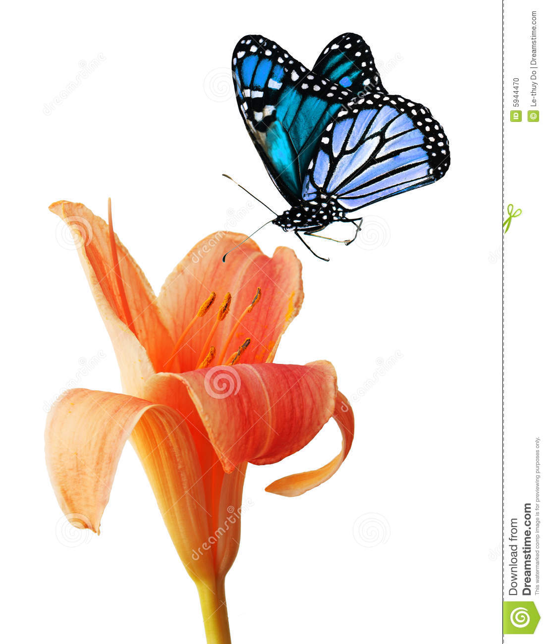 blue butterflies liliesjpg - photo #19