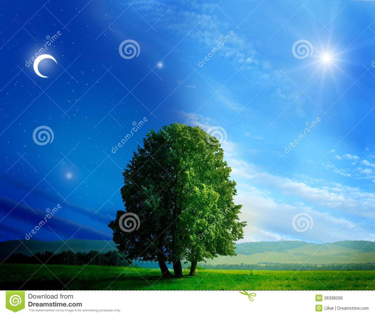 Day And Night Tree Royalty Free Stock Image  Image: 26398266