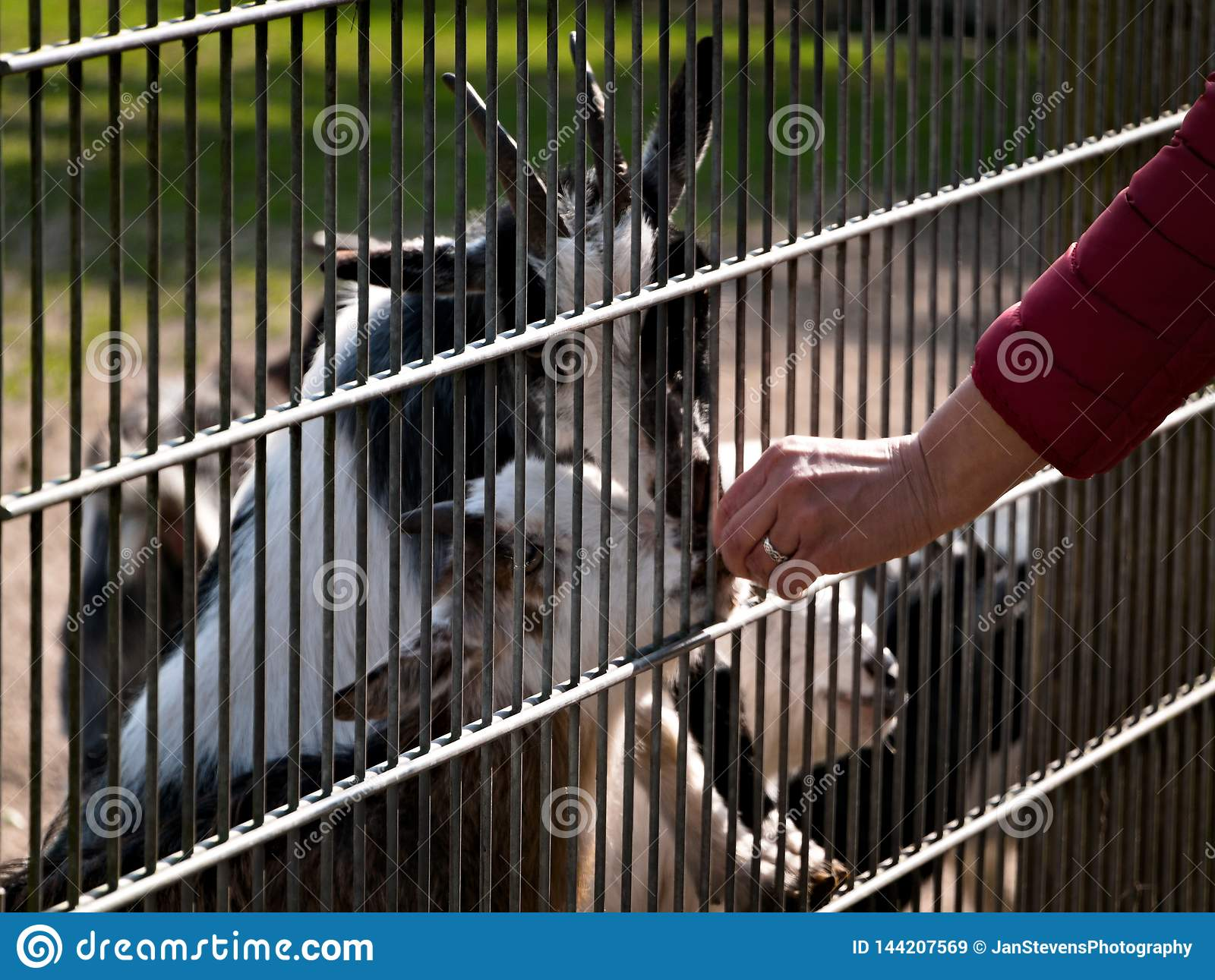 Day at the zoo stock image  Image of activity, animals - 144207569