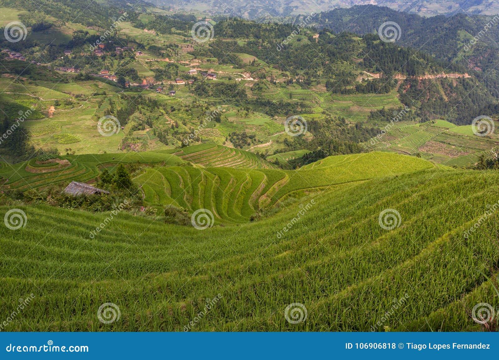 Dazhai; Chiny; Guangxi; Azja; Chińczyk; Azjata; Rice; Ryżowi tarasy; Longsheng Rice tarasy; Longji Rice tarasy; Smoka ` s Backbon