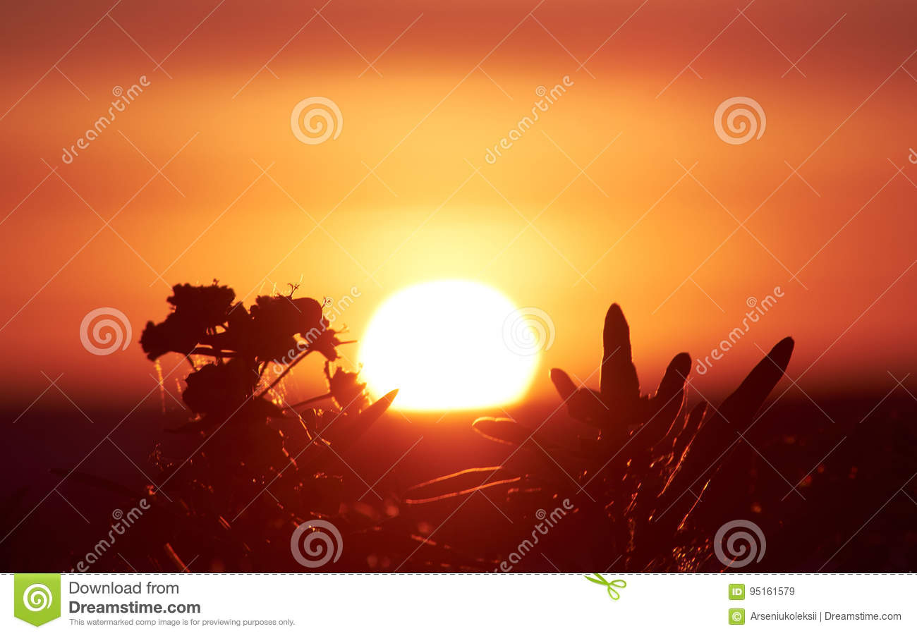 Dazzling Sun And Plants Stock Image Image Of Evening 95161579