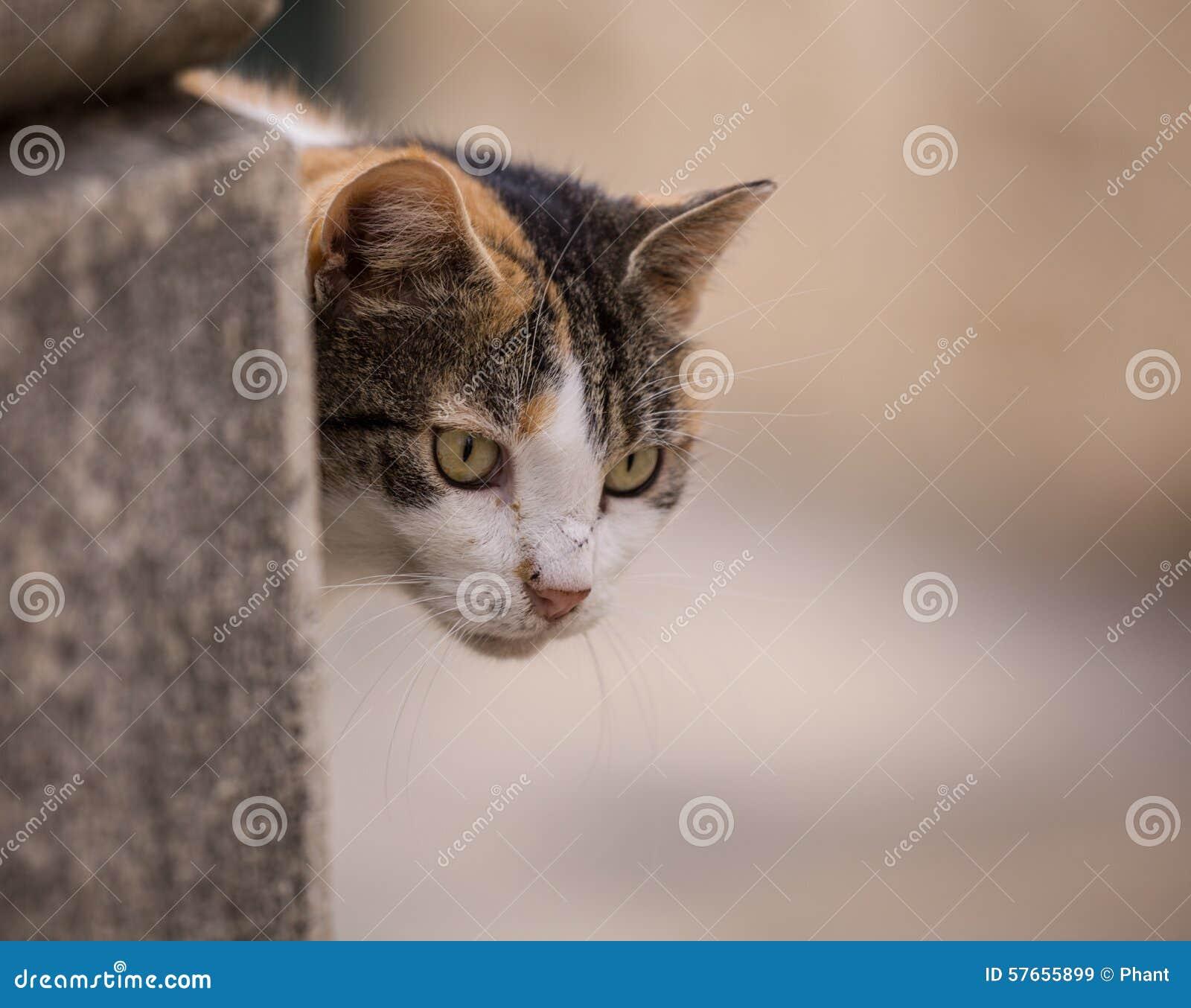 Dcat siedzi na ścianie outdoors