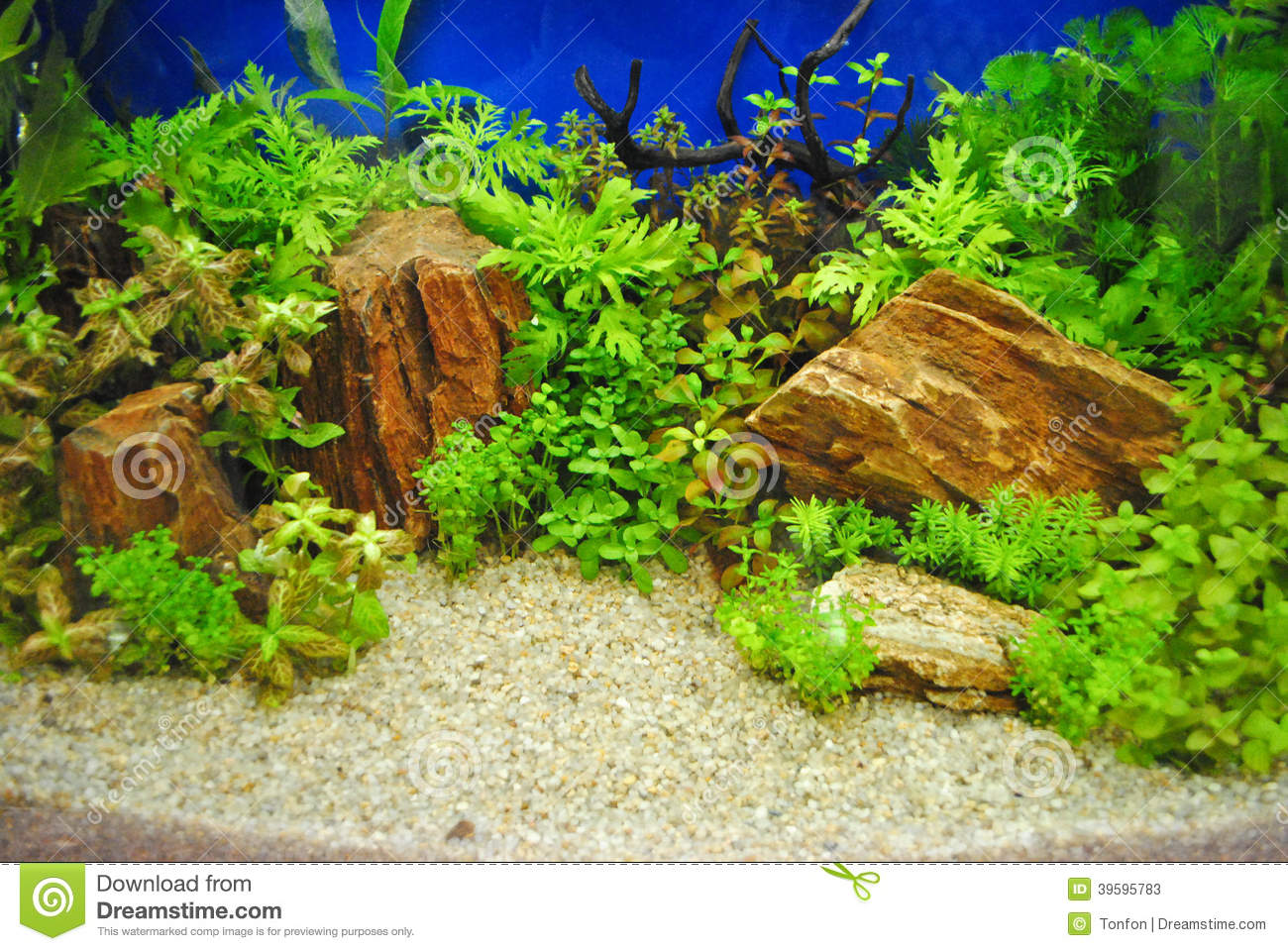 d 233 coration d aquarium