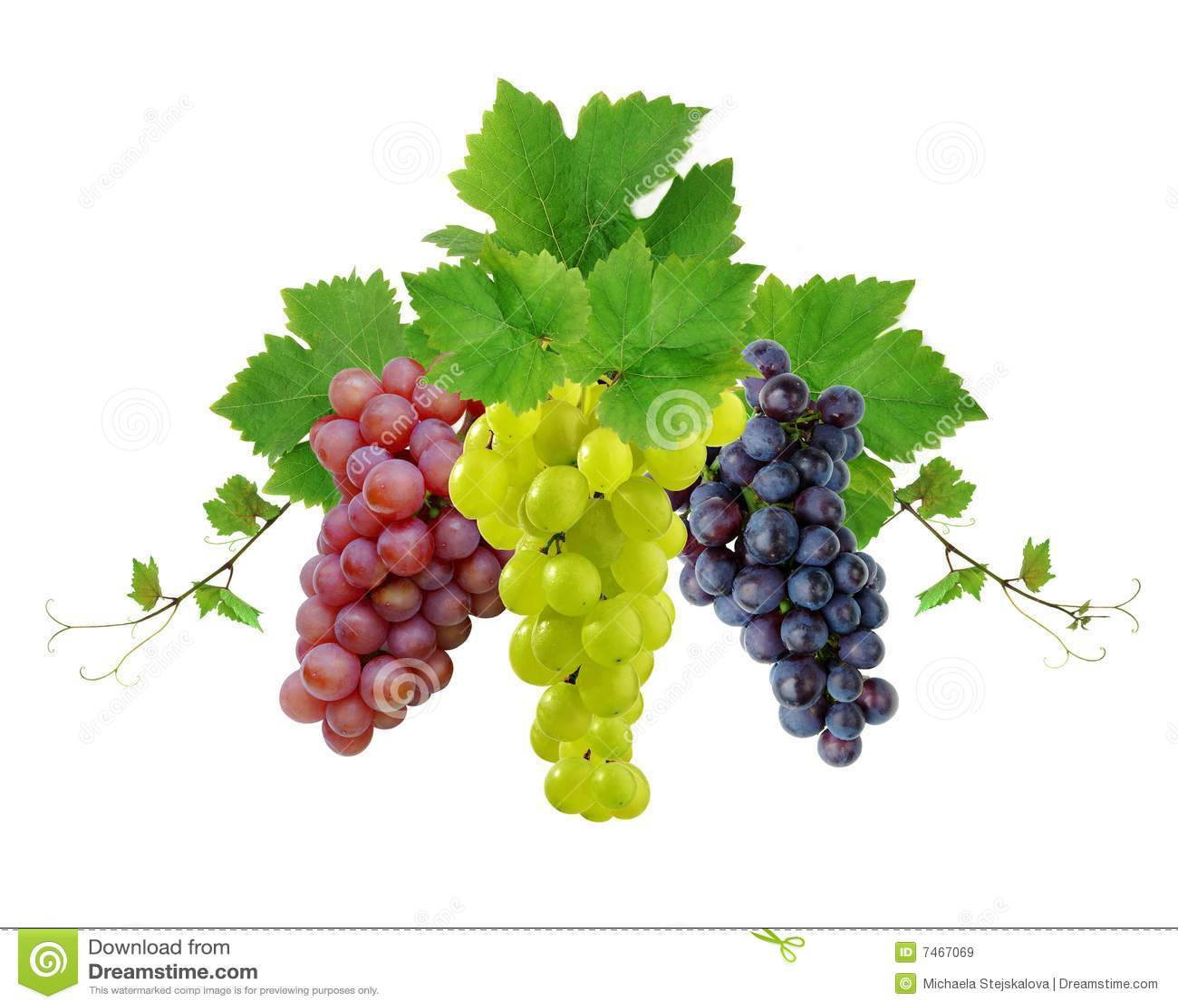 Ddecoration winogron wino